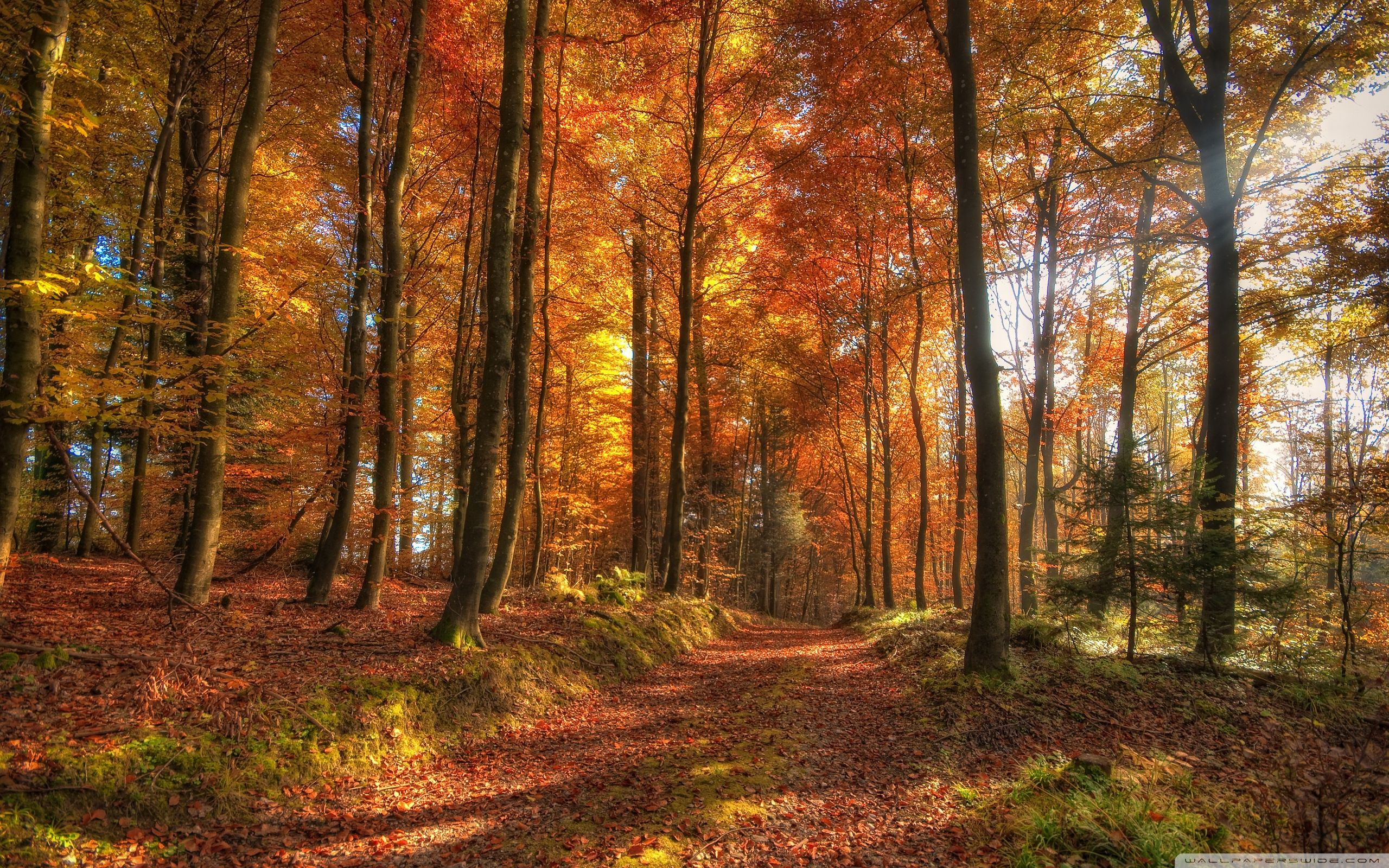 Fall Forest Wallpapers Top Free Fall Forest Backgrounds Wallpaperaccess