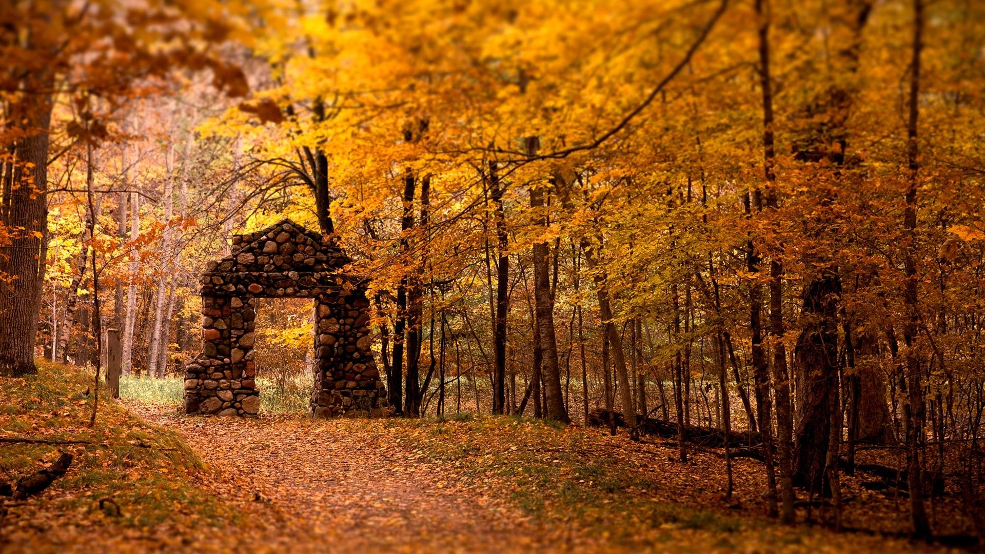 Fall Forest Wallpapers Top Free Fall Forest Backgrounds