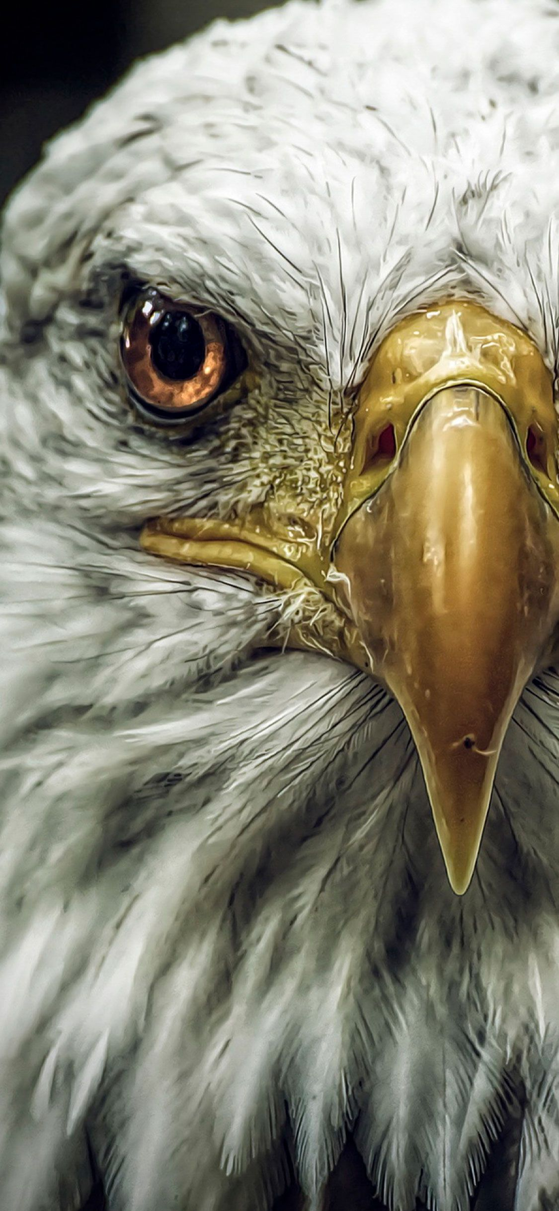 Eagle Iphone Wallpapers Top Free Eagle Iphone Backgrounds Wallpaperaccess