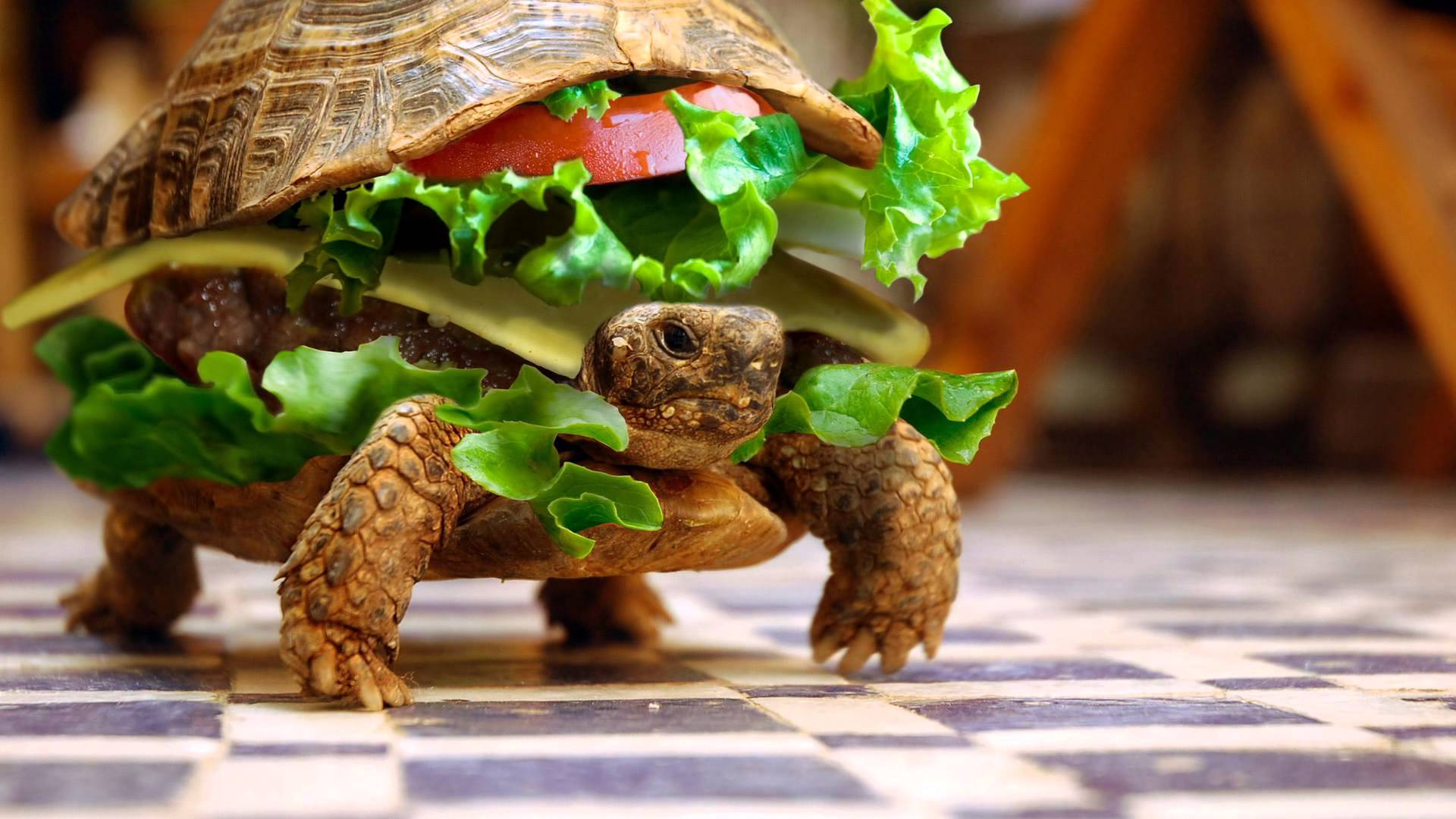 Fabulous Funny Animals Wallpapers Top Free Funny Animals Download Free Architecture Designs Momecebritishbridgeorg