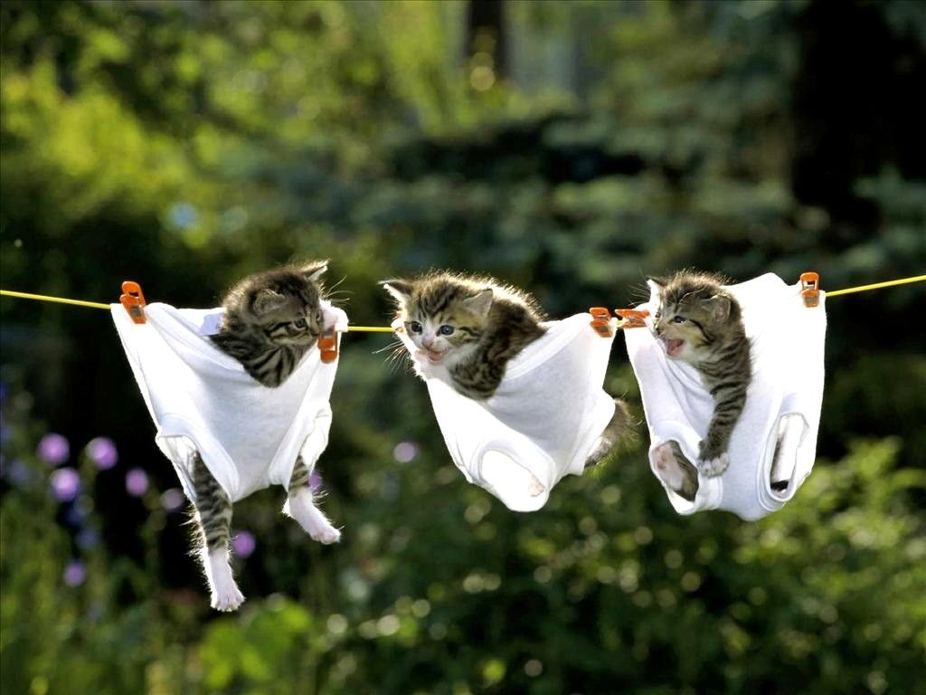 Wondrous Funny Animals Wallpapers Top Free Funny Animals Download Free Architecture Designs Momecebritishbridgeorg