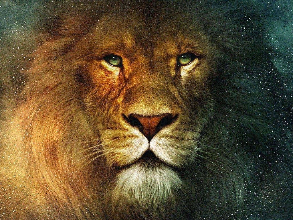 Lion Face Wallpapers Top Free Lion Face Backgrounds Wallpaperaccess