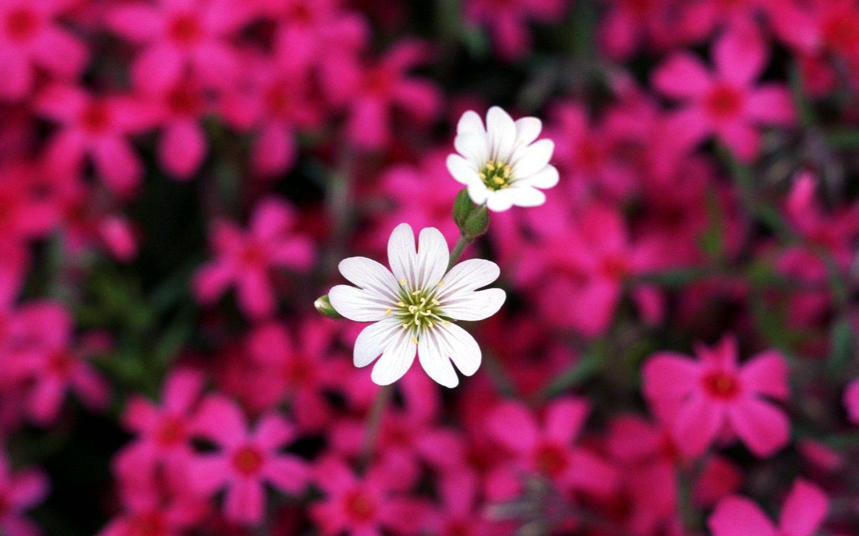 Flower High Quality Desktop Wallpapers Top Free Flower High Quality Desktop Backgrounds Wallpaperaccess