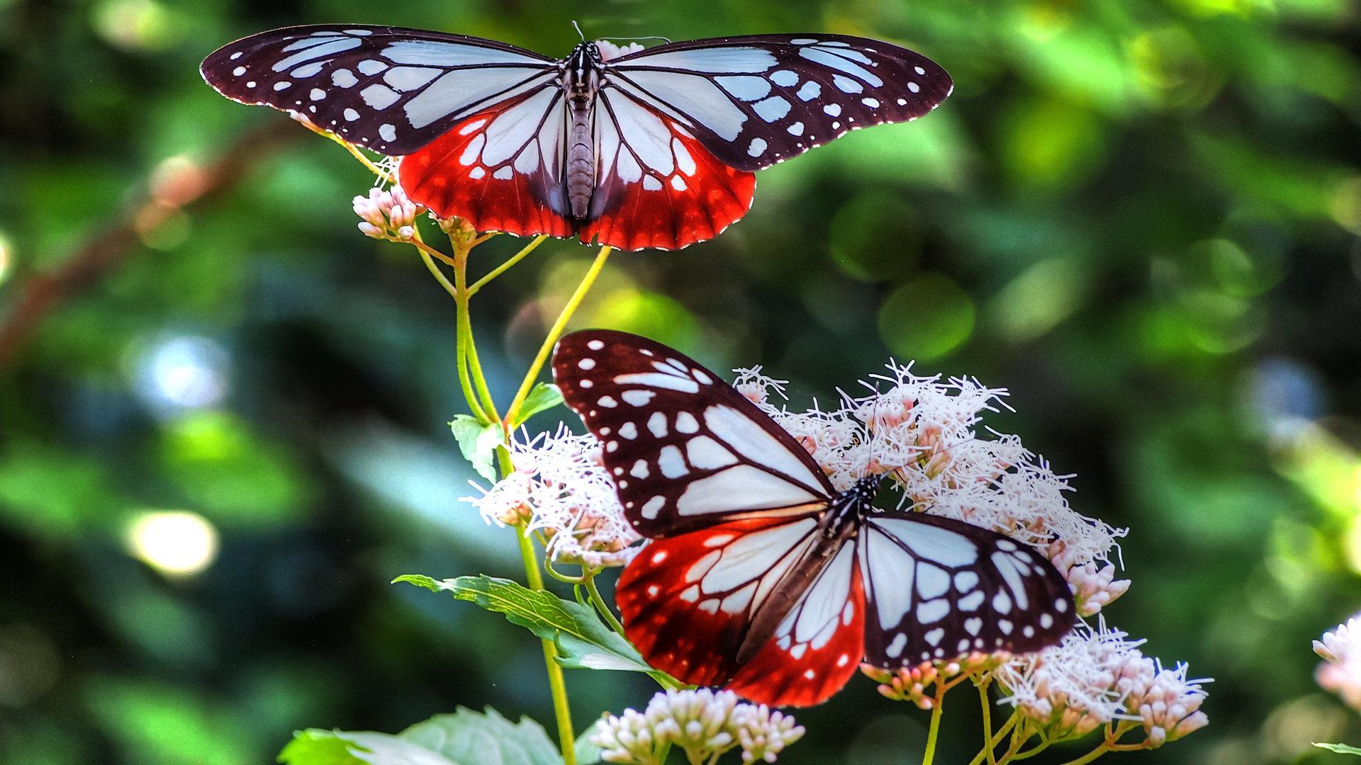 Full HD Butterfly Wallpapers - Top Free Full HD Butterfly ...