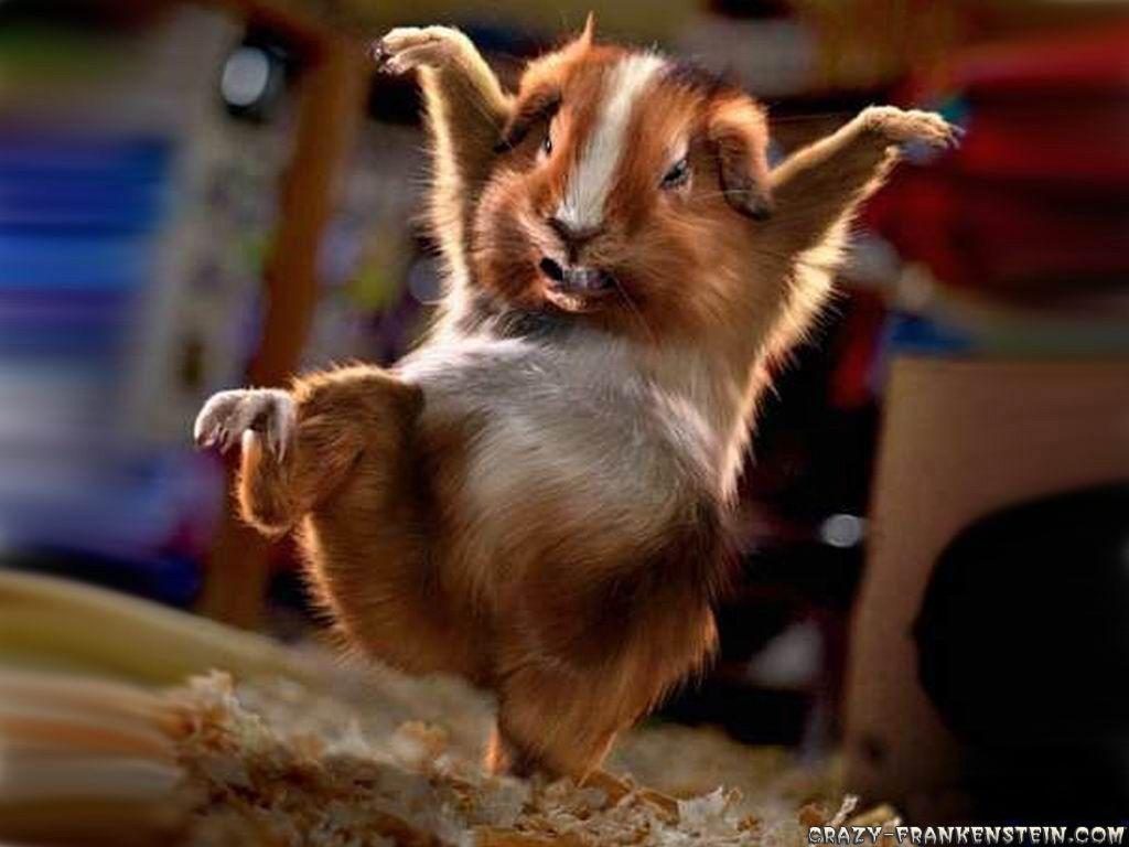 Cute Funny Animal Hd Wallpapers Top Free Cute Funny Animal Hd Backgrounds Wallpaperaccess