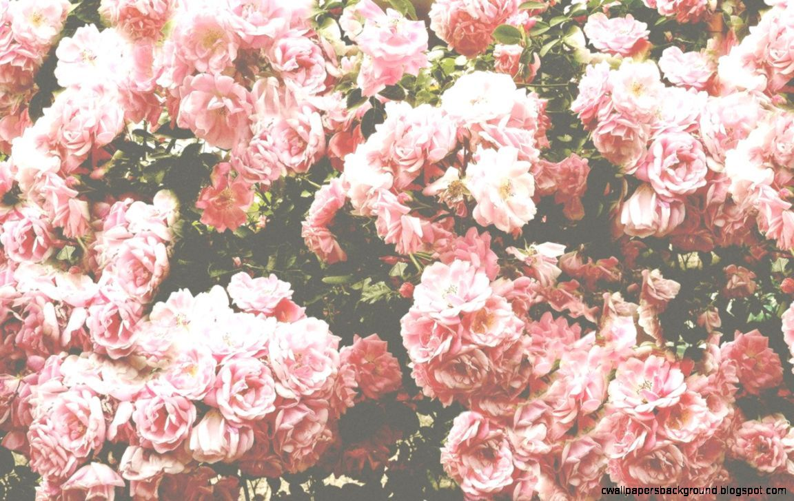 Pink Flowers Aesthetic Wallpapers Top Free Pink Flowers Aesthetic Backgrounds Wallpaperaccess Bubbles wallpaper wallpaper s wallpaper backgrounds screen wallpaper vintage phone wallpaper good vibes wallpaper chill wallpaper pastel pink wallpaper we hope you enjoy our rising collection of aesthetic wallpaper. pink flowers aesthetic wallpapers top