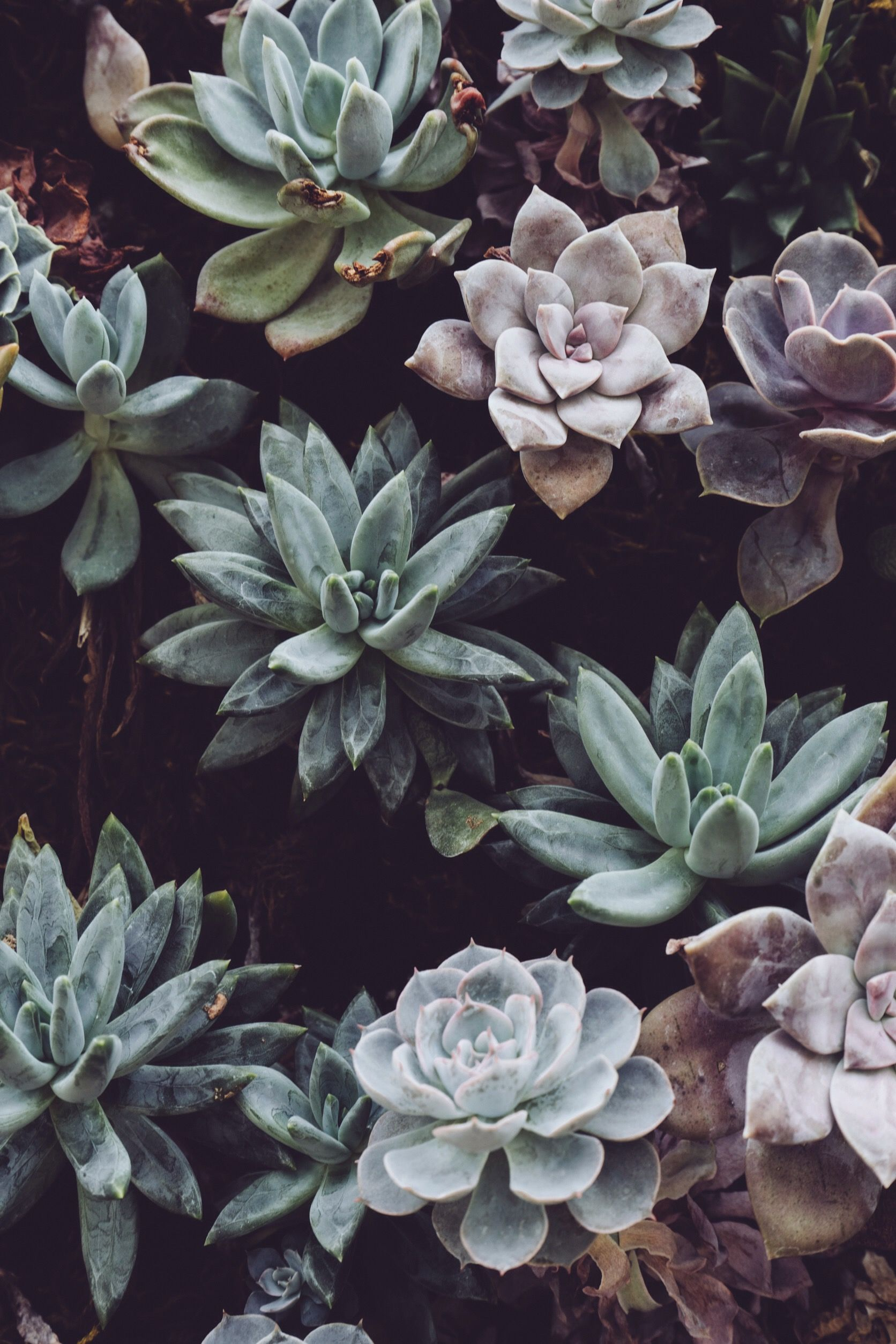 52 Best Free Plant Aesthetic Wallpapers Wallpaperaccess