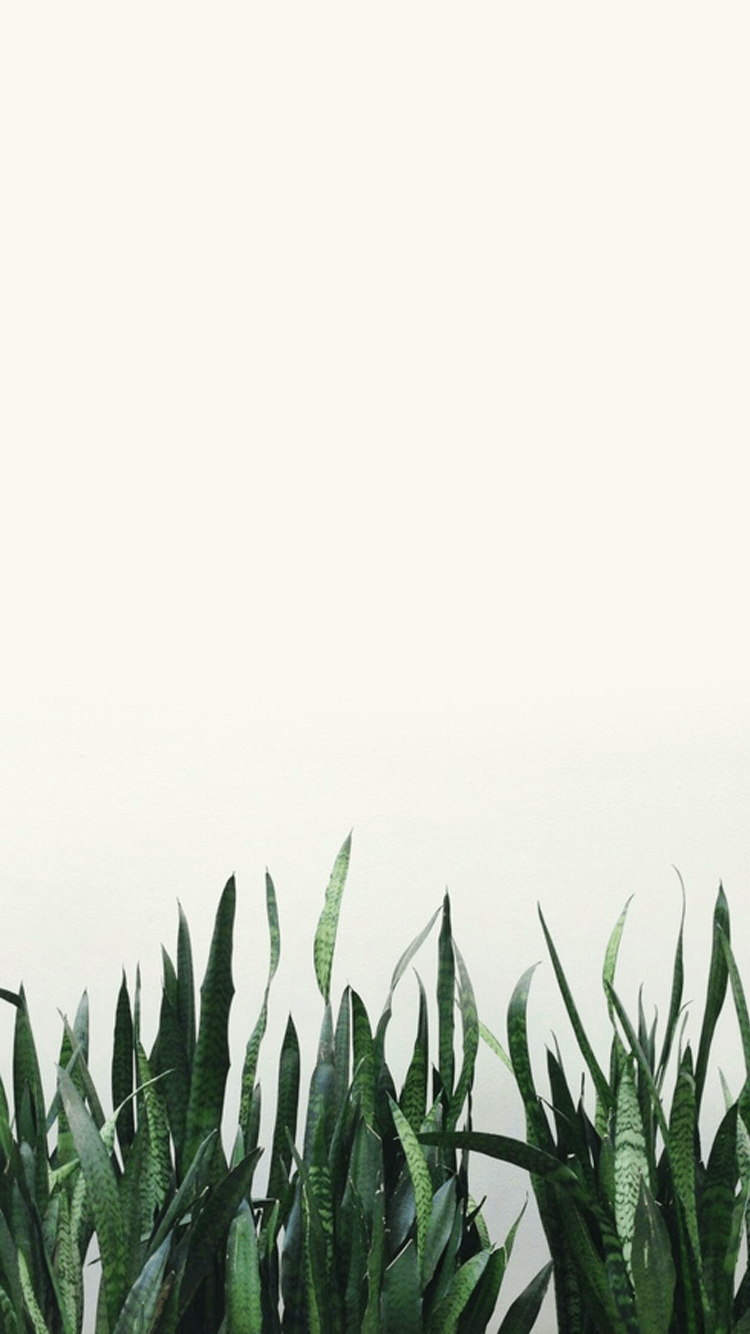 Plant Aesthetic Wallpapers Top Free Plant Aesthetic Backgrounds Wallpaperaccess