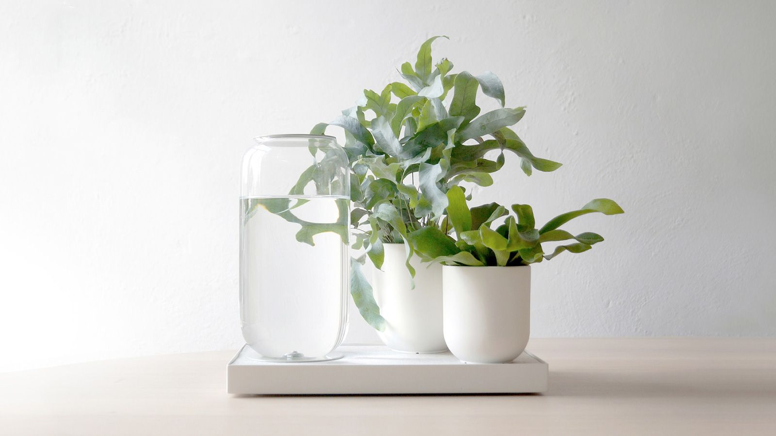 Plant Aesthetic Wallpapers - Top Free Plant Aesthetic ...