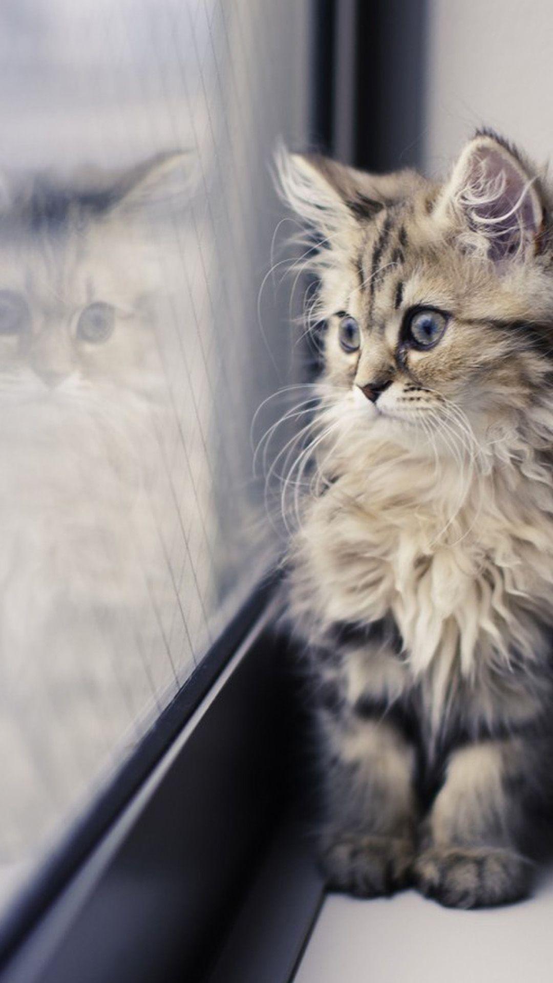 Cute Cat Iphone Hd Wallpapers Top Free Cute Cat Iphone Hd Backgrounds Wallpaperaccess