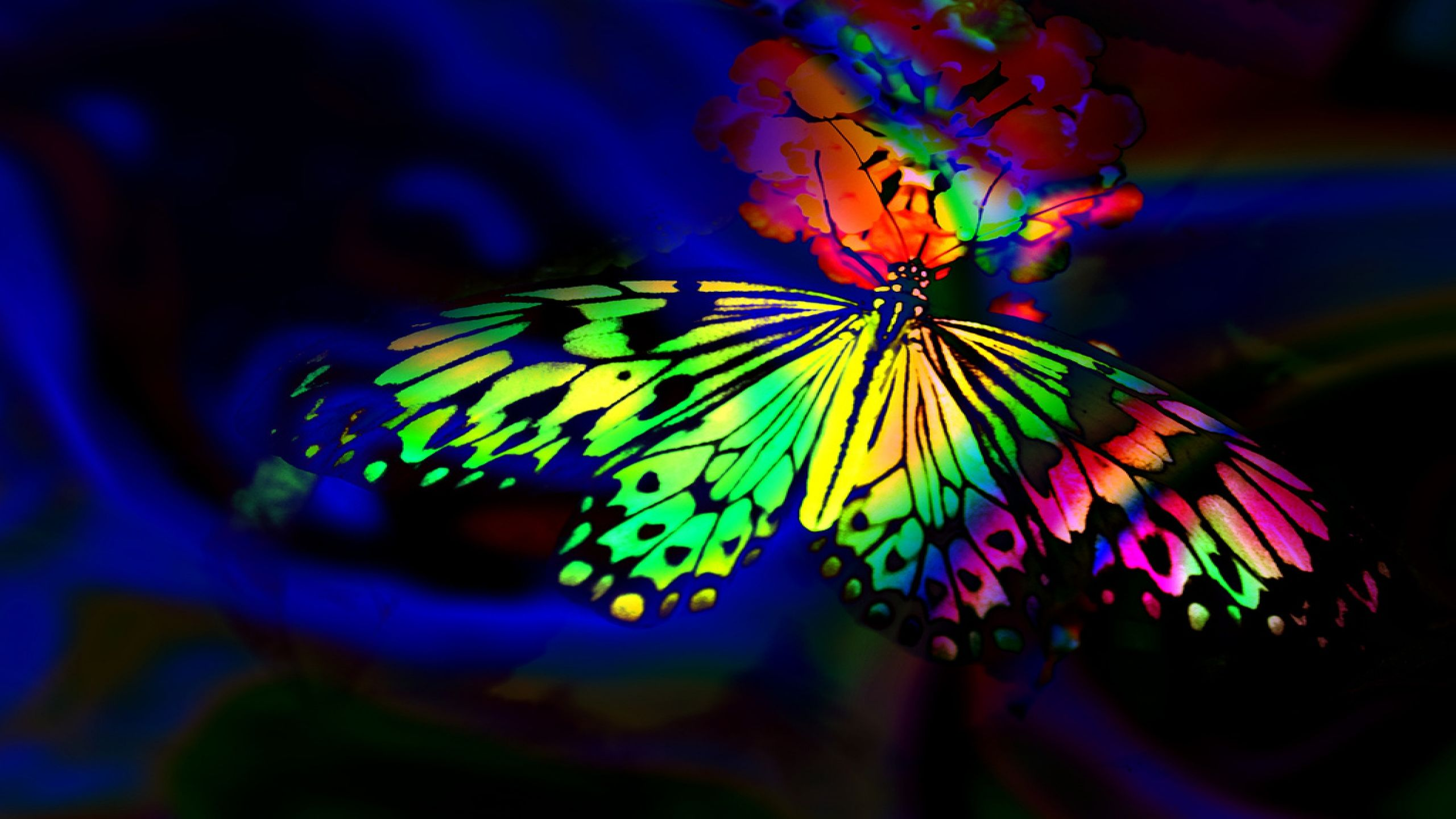 Rainbow Butterfly Wallpapers Top Free Rainbow Butterfly