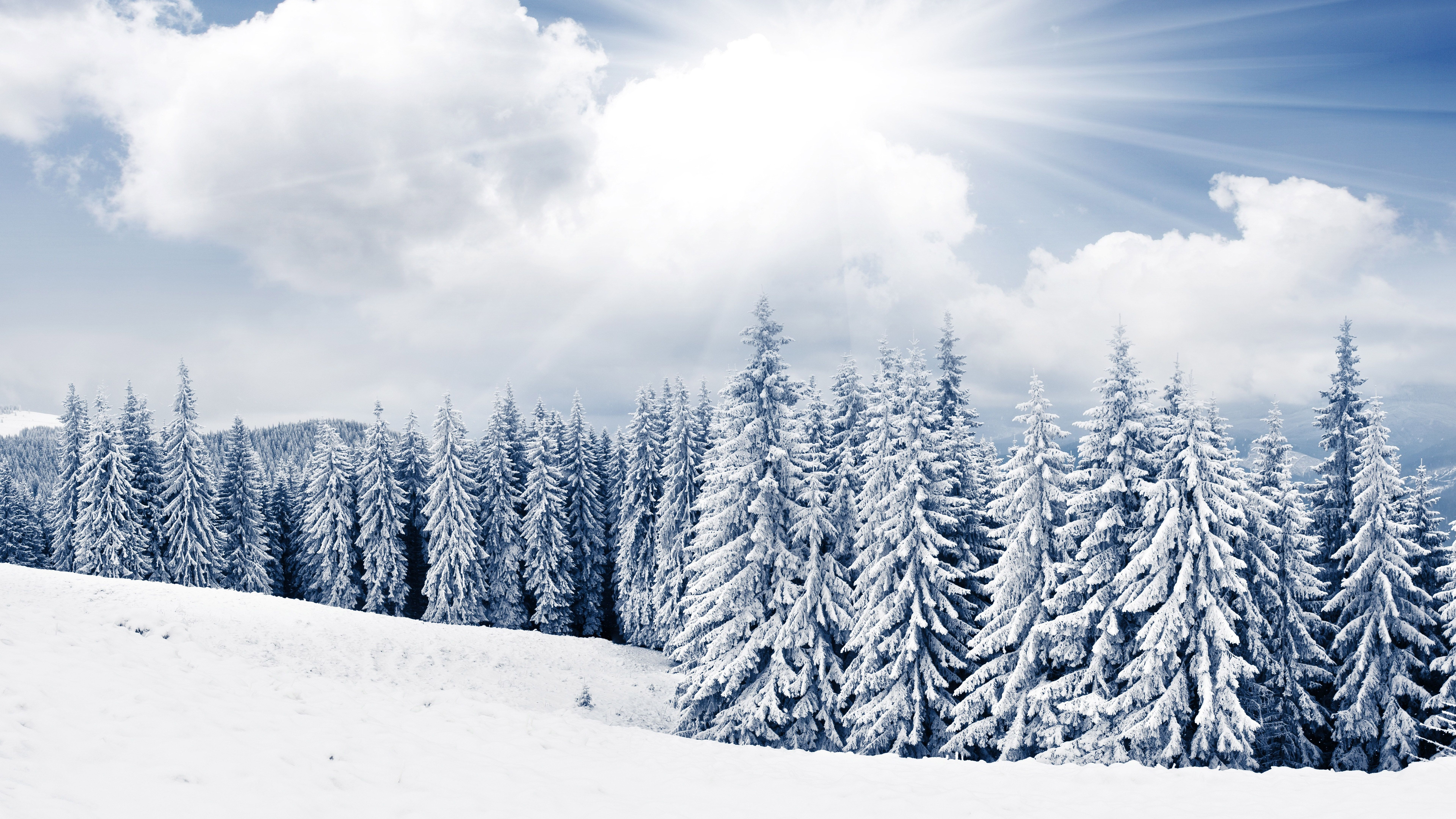 Winter Tree Wallpapers - Top Free Winter Tree Backgrounds