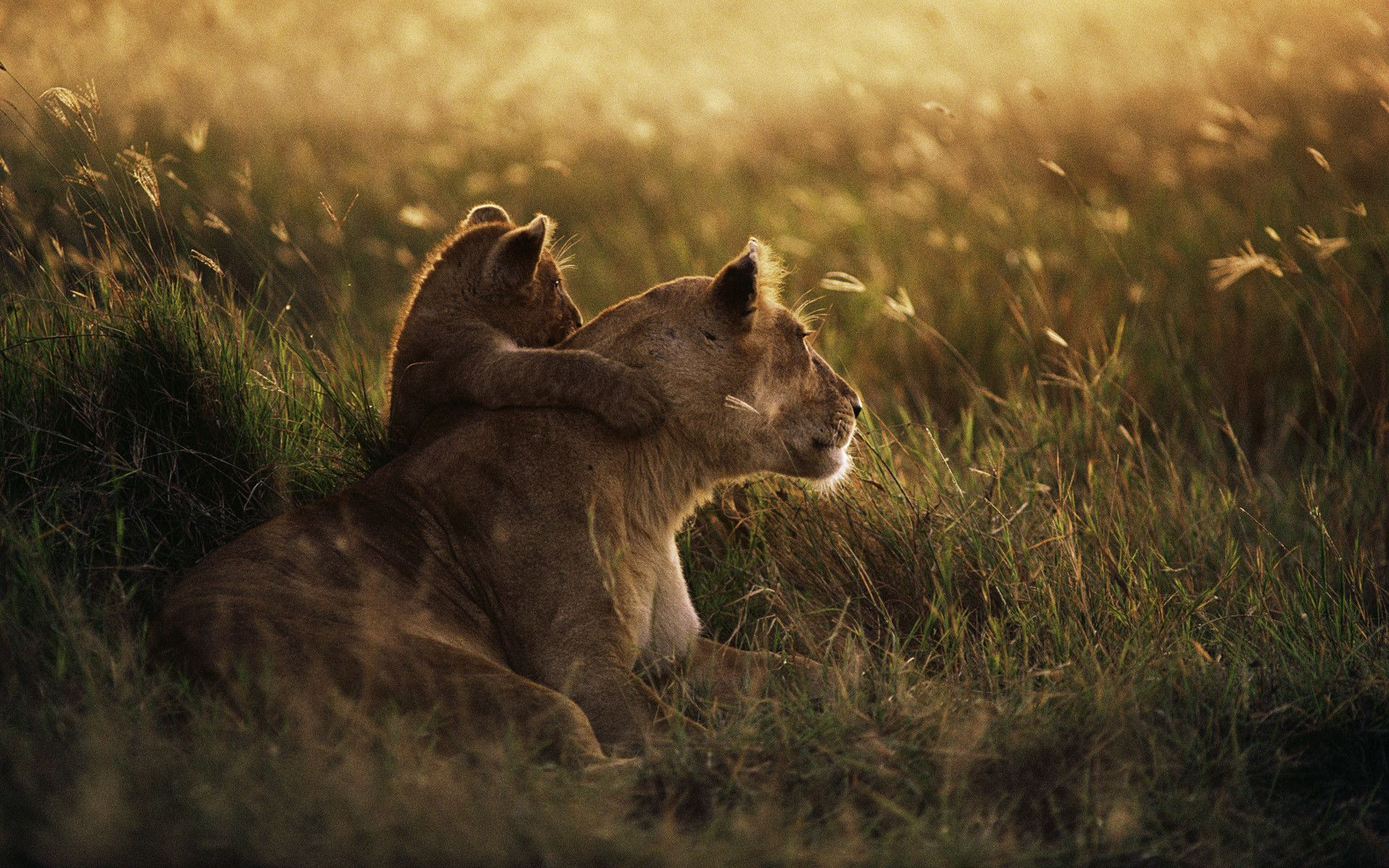 African Animal Desktop Wallpapers - Top Free African Animal Desktop  Backgrounds - WallpaperAccess