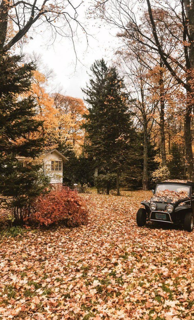758x1248 Ngôi nhà ngọt ngào ngôi nhà mơ ước với những chiếc lá rơi - Hình nền ý tưởng, Hình nền iPhone, Bảng màu