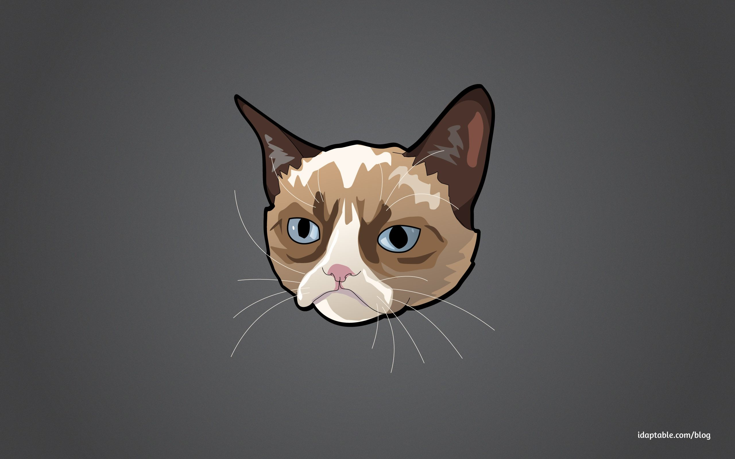 1600x1000 Grumpy Cat No Wallpaper 6911871