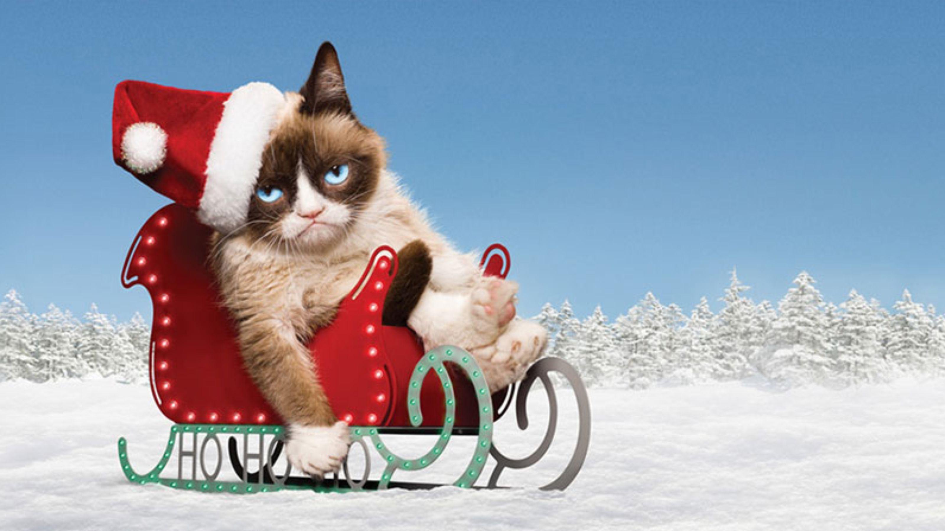 Grumpy Cat Wallpapers - Top Free Grumpy Cat Backgrounds ...