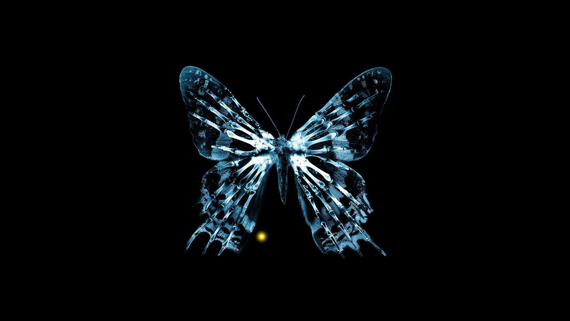 Fringe Butterfly Wallpapers Top Free Fringe Butterfly Backgrounds Wallpaperaccess