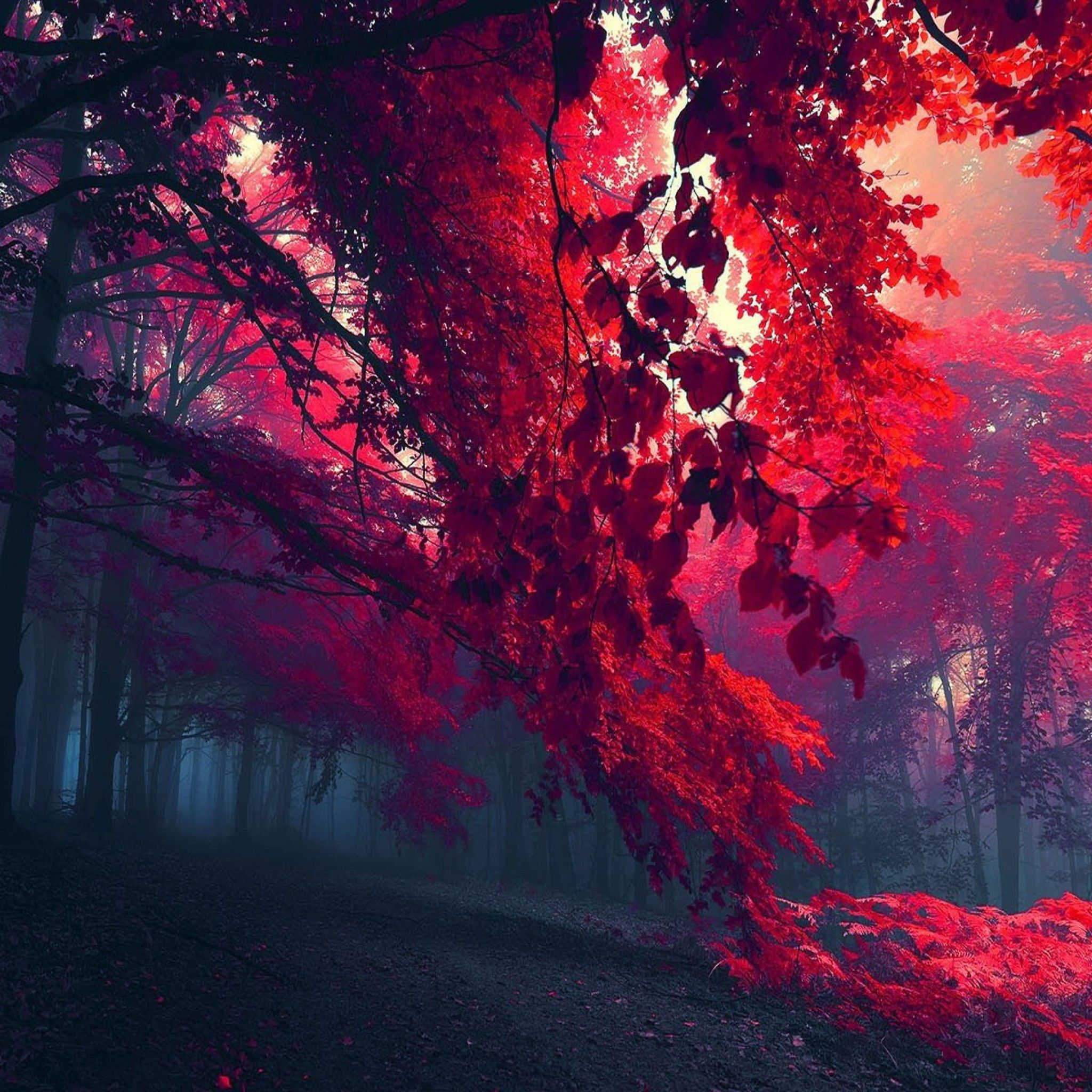 Red iPad Wallpapers - Top Free Red iPad ...