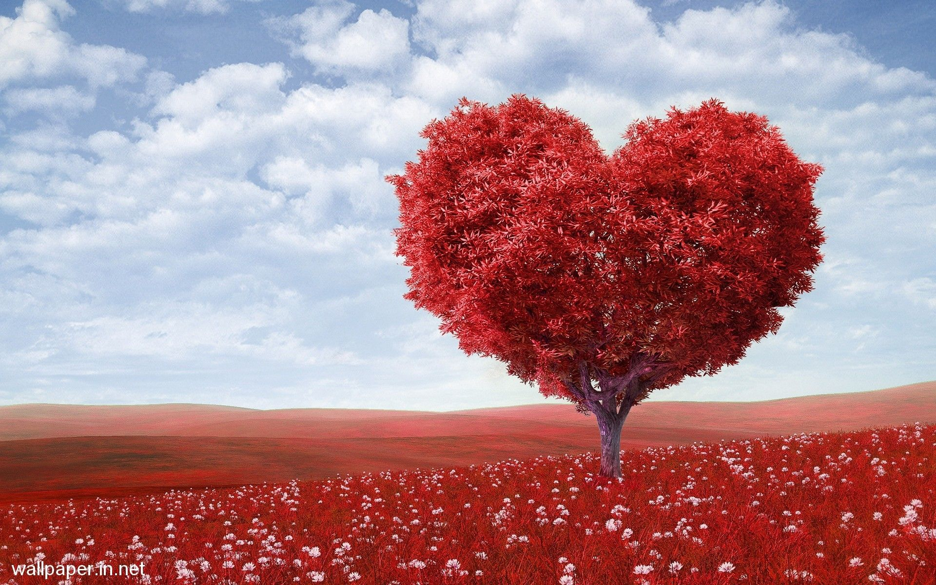 Nature Love Wallpapers Top Free Nature Love Backgrounds Wallpaperaccess