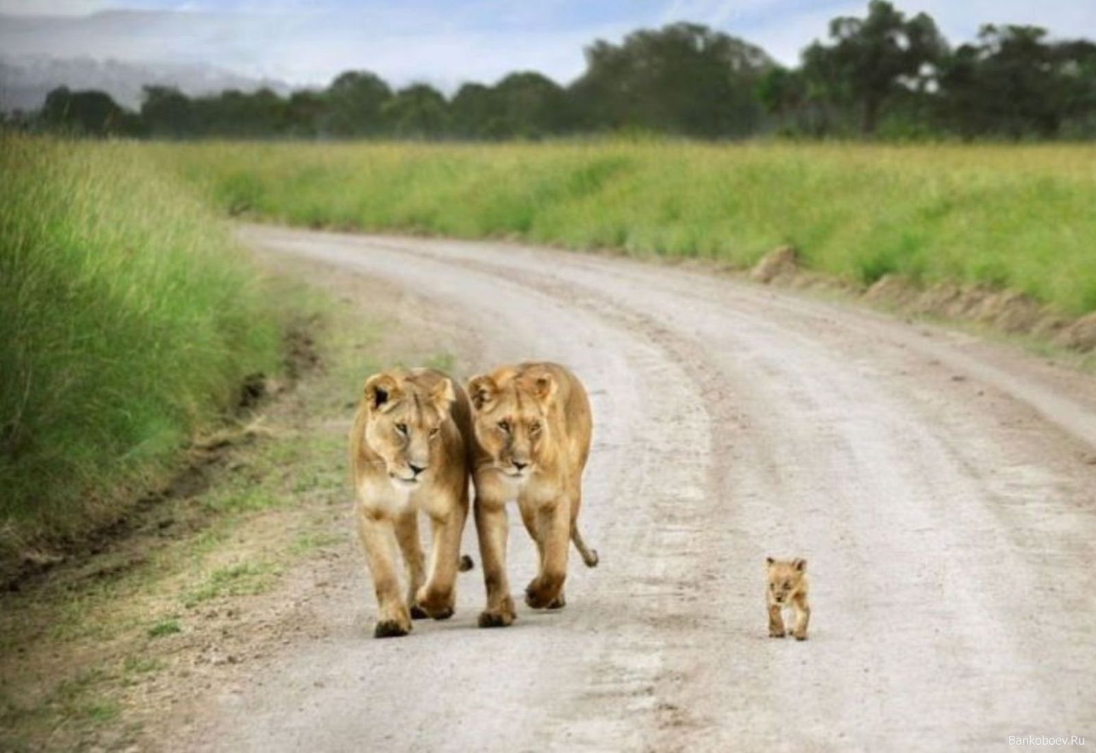 Baby Wild Animals Wallpapers Top Free Baby Wild Animals Backgrounds Wallpaperaccess