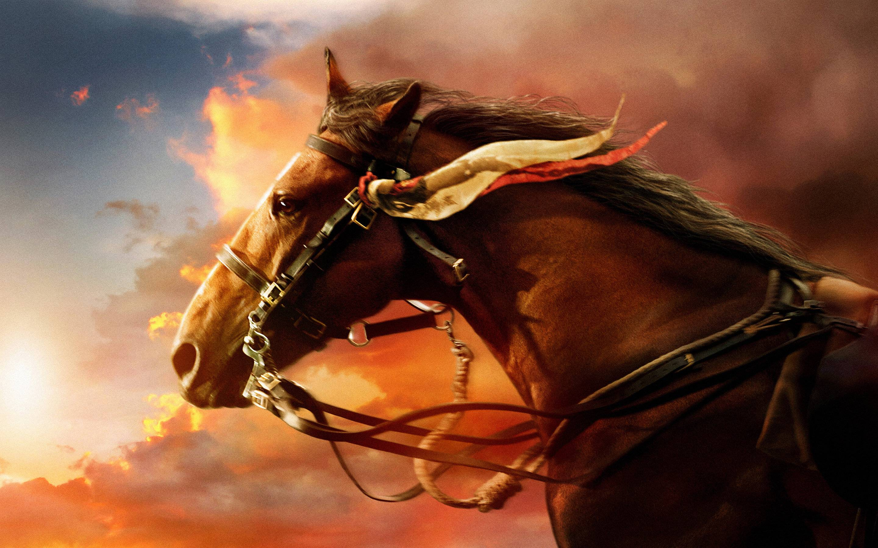 Horse Pc Wallpapers Top Free Horse Pc Backgrounds Wallpaperaccess