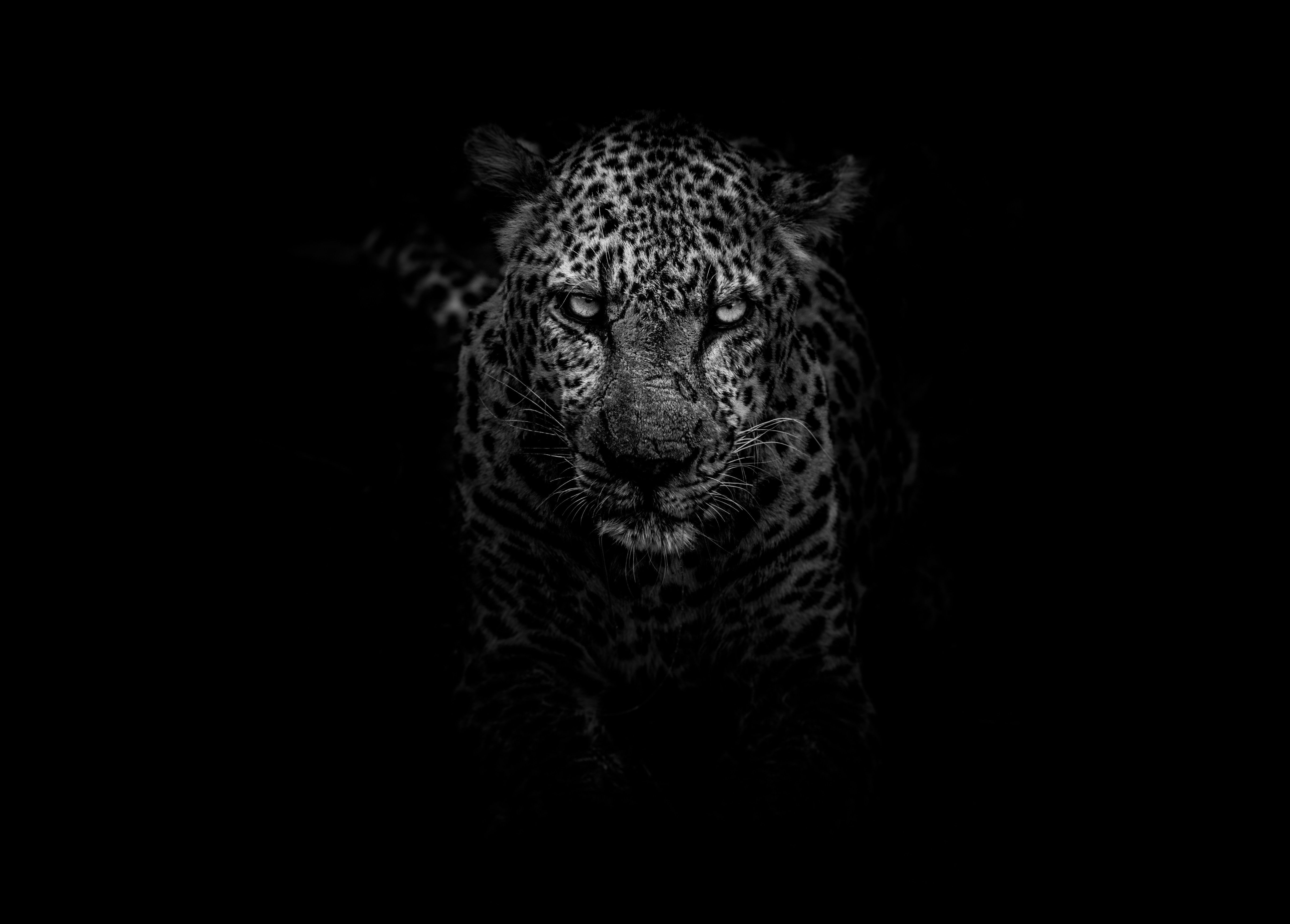 Black Animals Wallpapers Top Free Black Animals Backgrounds Wallpaperaccess