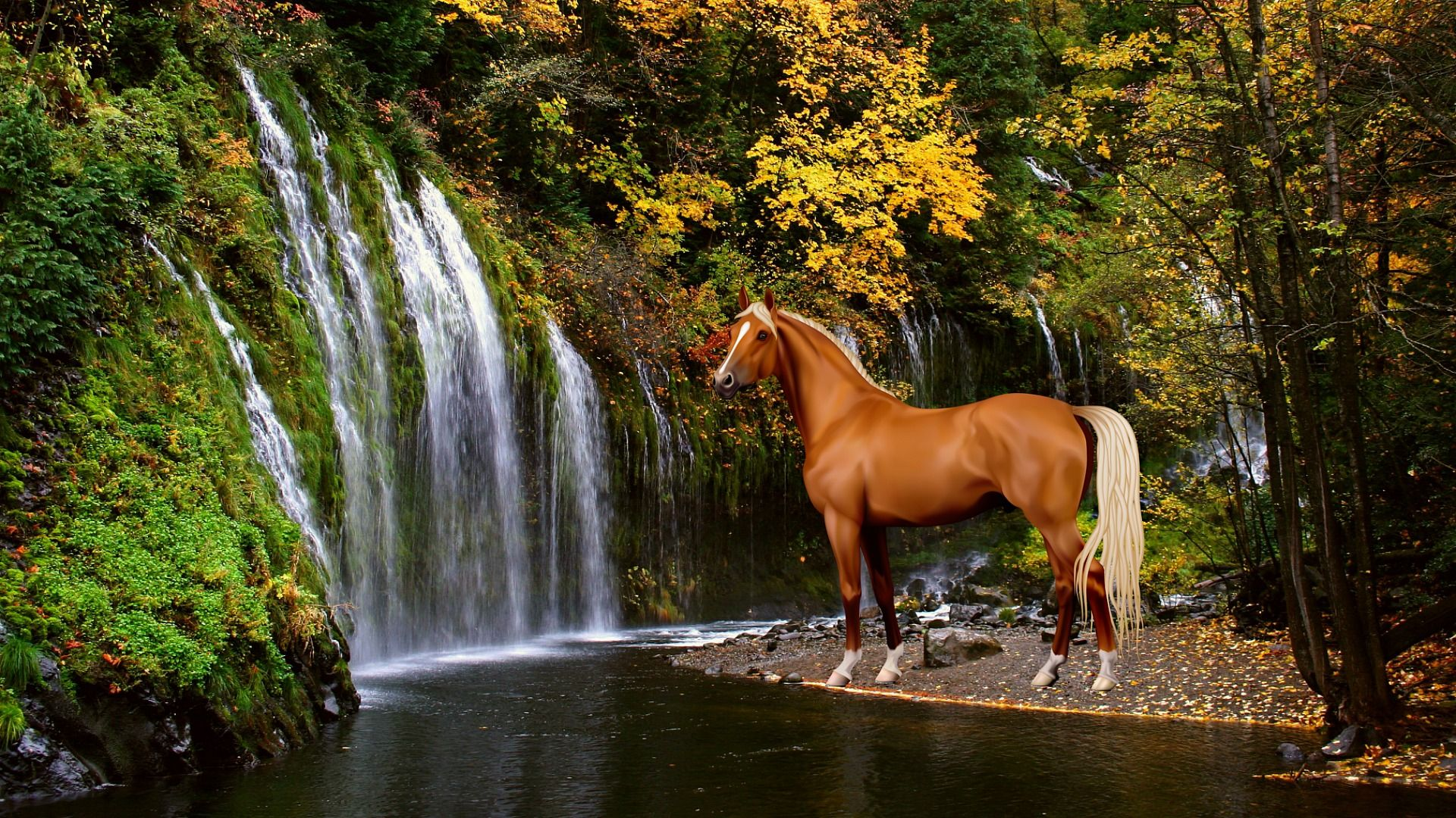 Autumn Horse Wallpapers Top Free Autumn Horse Backgrounds