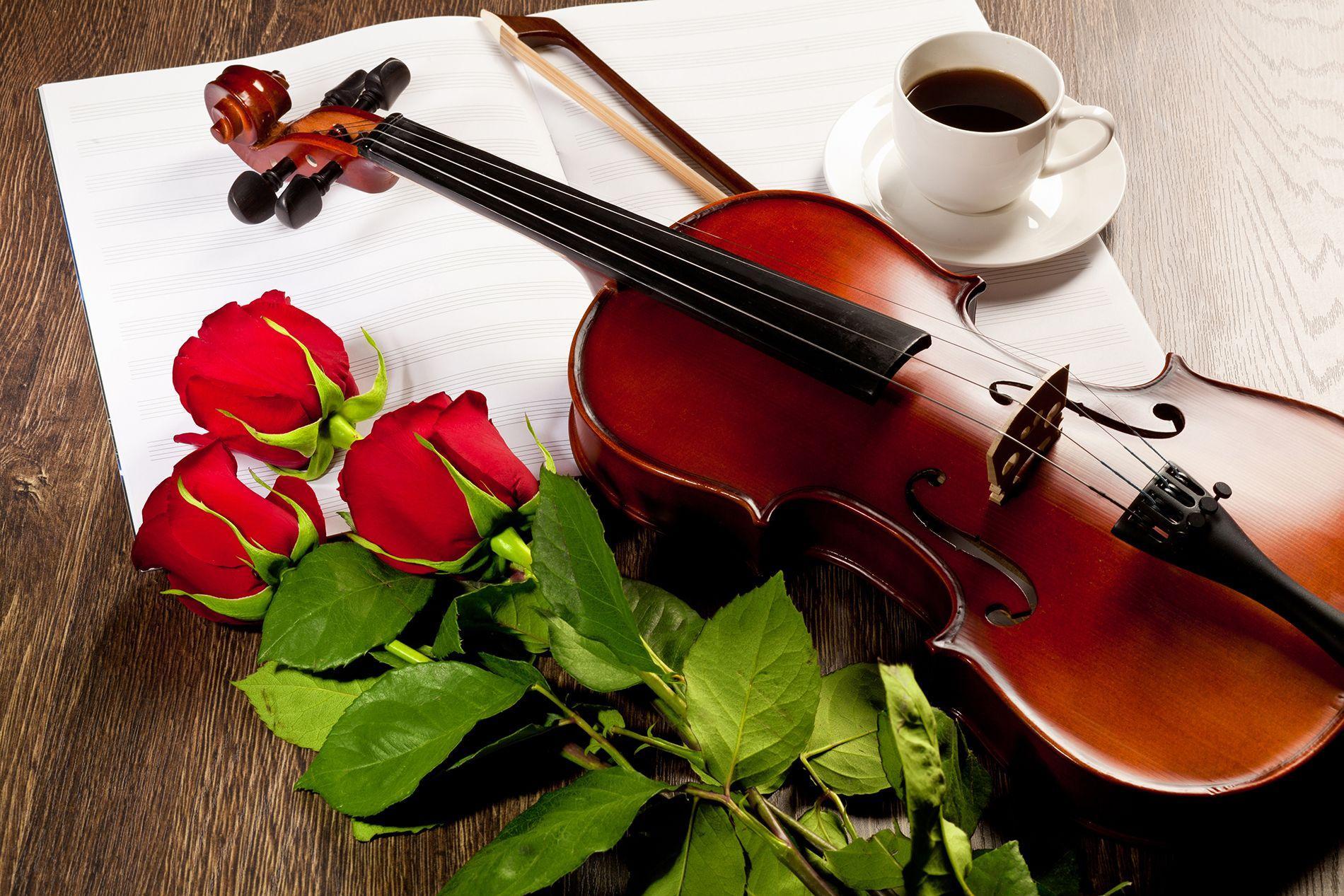 Violin Roses Wallpapers Top Free Violin Roses Backgrounds Wallpaperaccess
