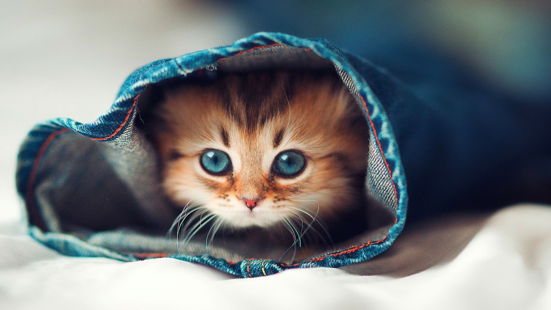 Cat Desktop Wallpapers Top Free Cat Desktop Backgrounds Wallpaperaccess