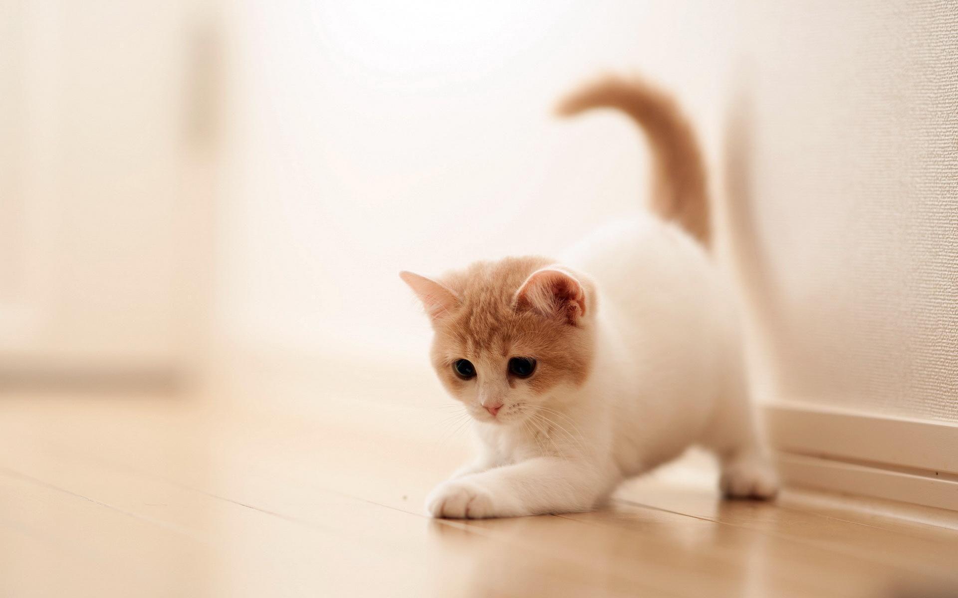 Best Cat Desktop Wallpapers Top Free Best Cat Desktop Backgrounds Wallpaperaccess