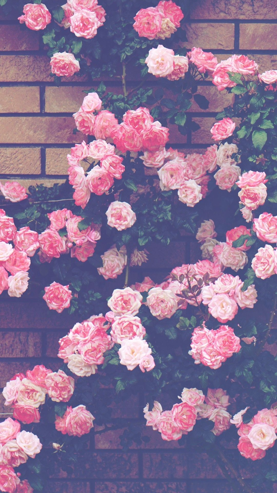 Download 3000 Wallpaper Bunga Pinterest HD Paling Keren