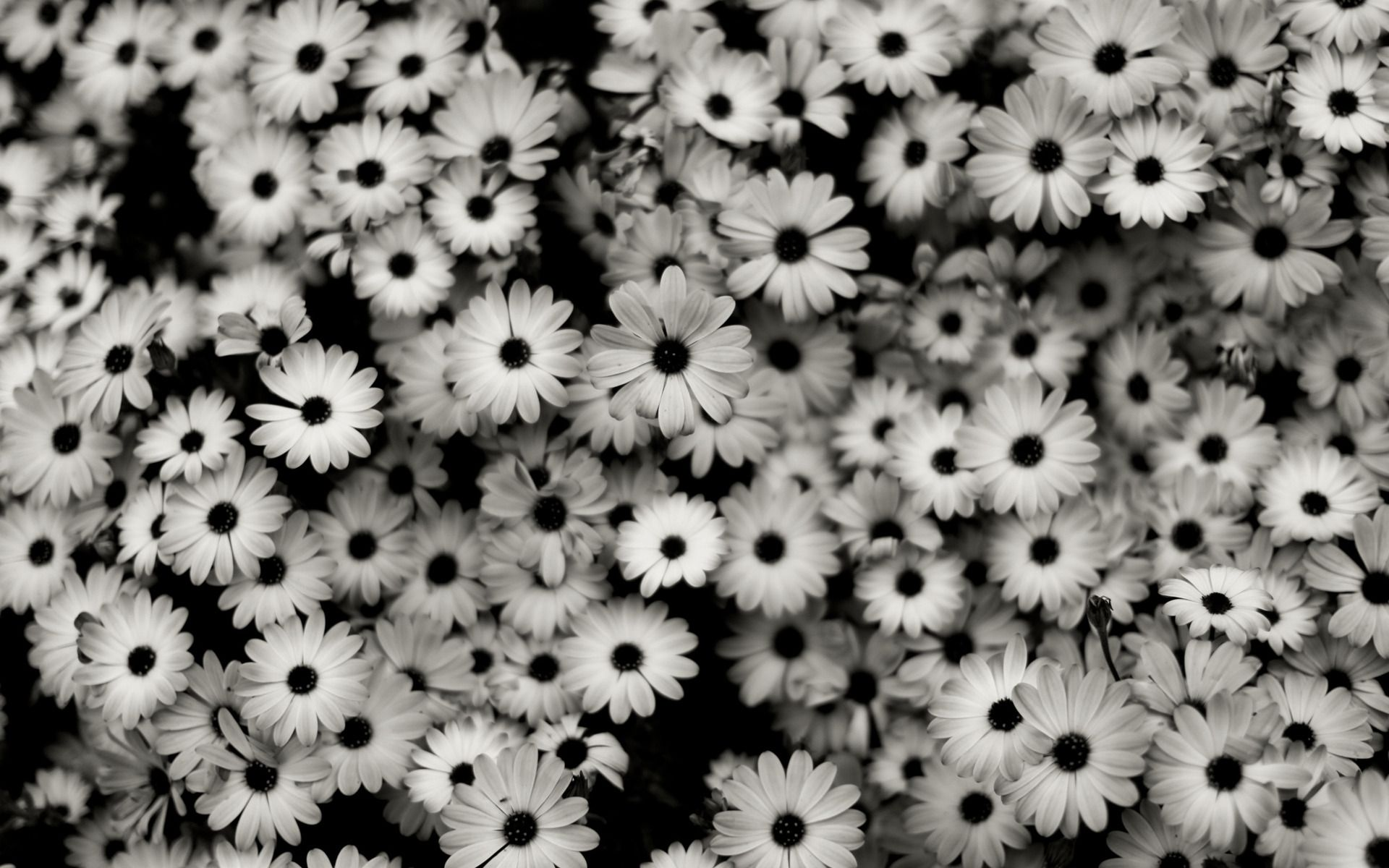 Unduh 77 Background Tumblr Black And White HD Paling Keren