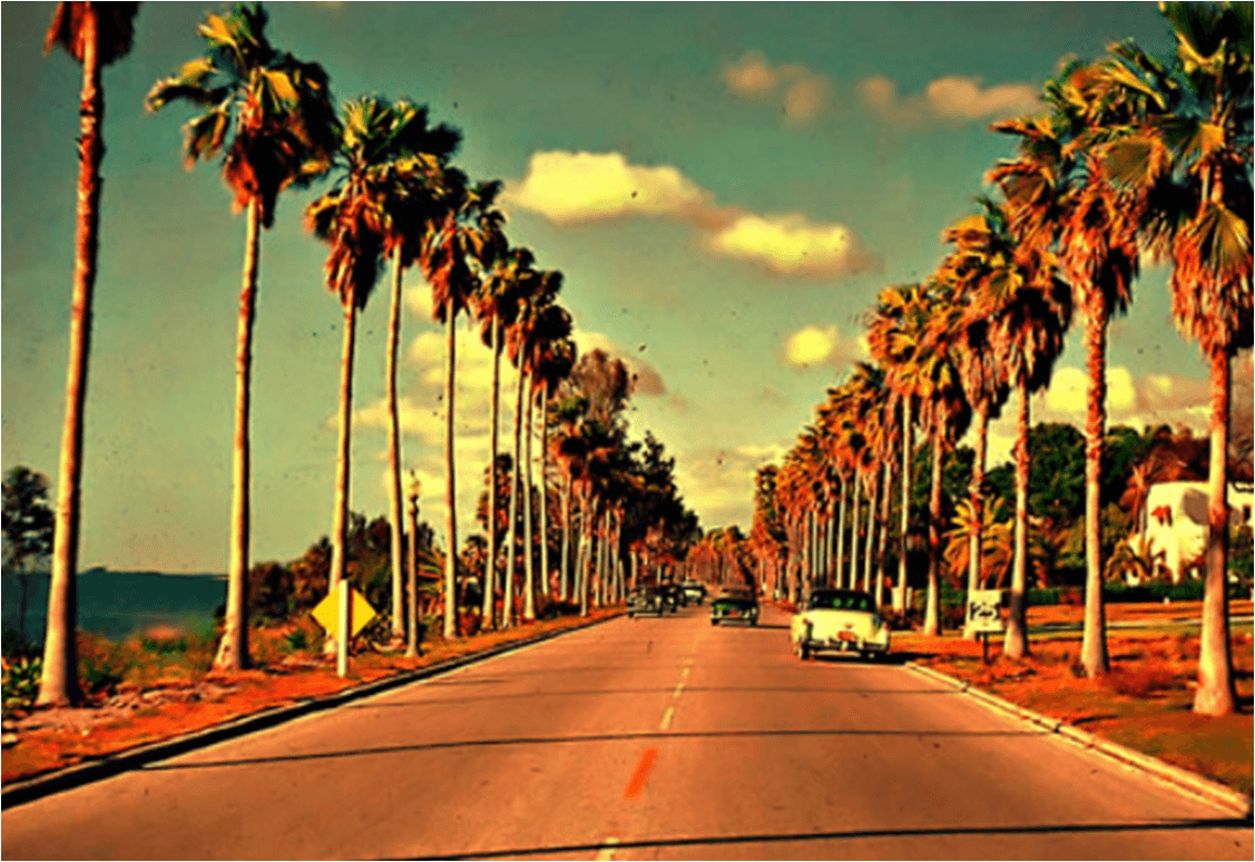 California Palm Trees Wallpapers Top Free California Palm Trees