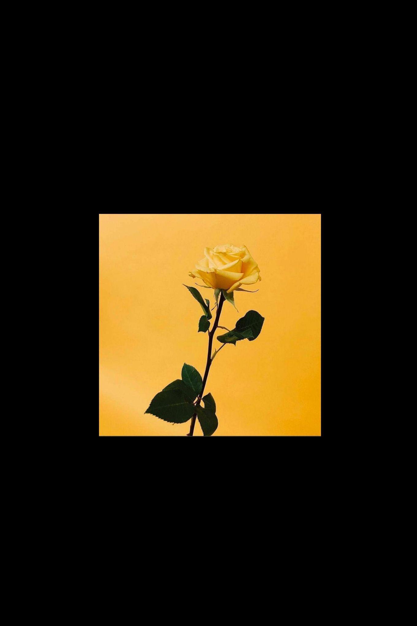 Korean Aesthetic Yellow Wallpapers Top Free Korean Aesthetic Yellow Backgrounds Wallpaperaccess