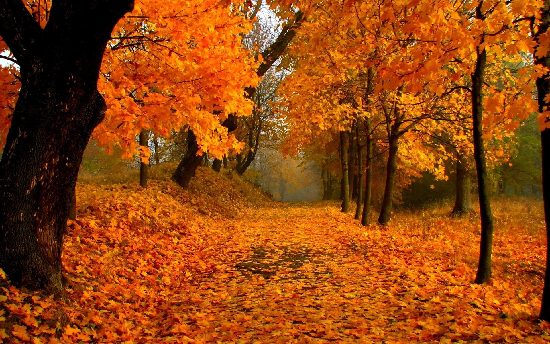 Autumn Scenery Wallpapers Top Free Autumn Scenery Backgrounds Wallpaperaccess