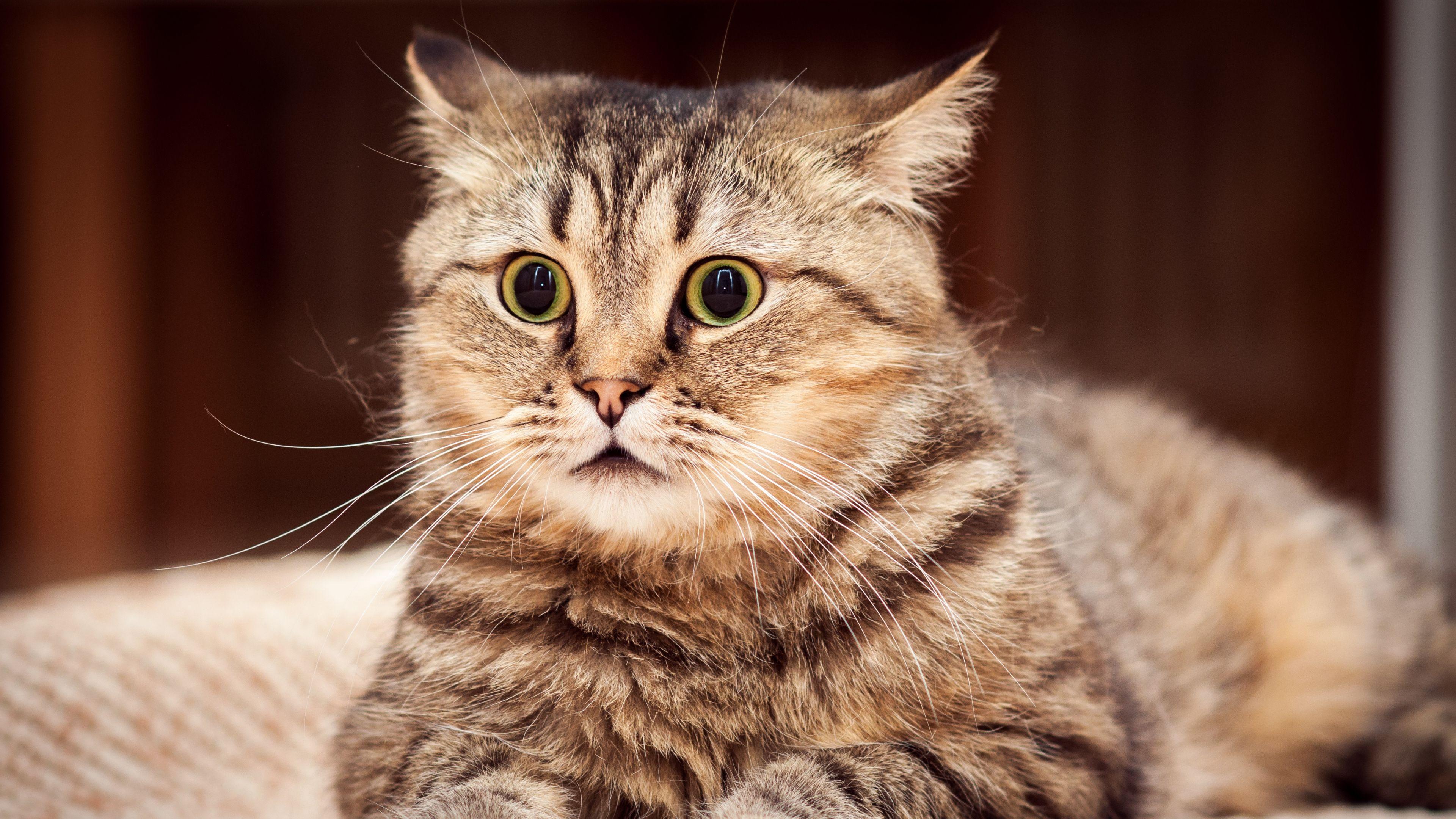 Cat 4k Wallpapers Top Free Cat 4k Backgrounds Wallpaperaccess