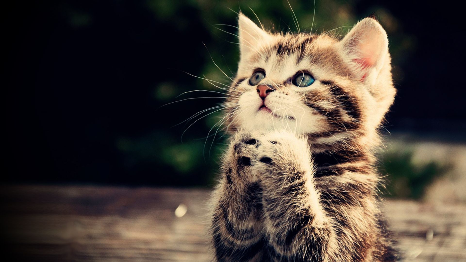 Funny Kitten Wallpapers - Top Free