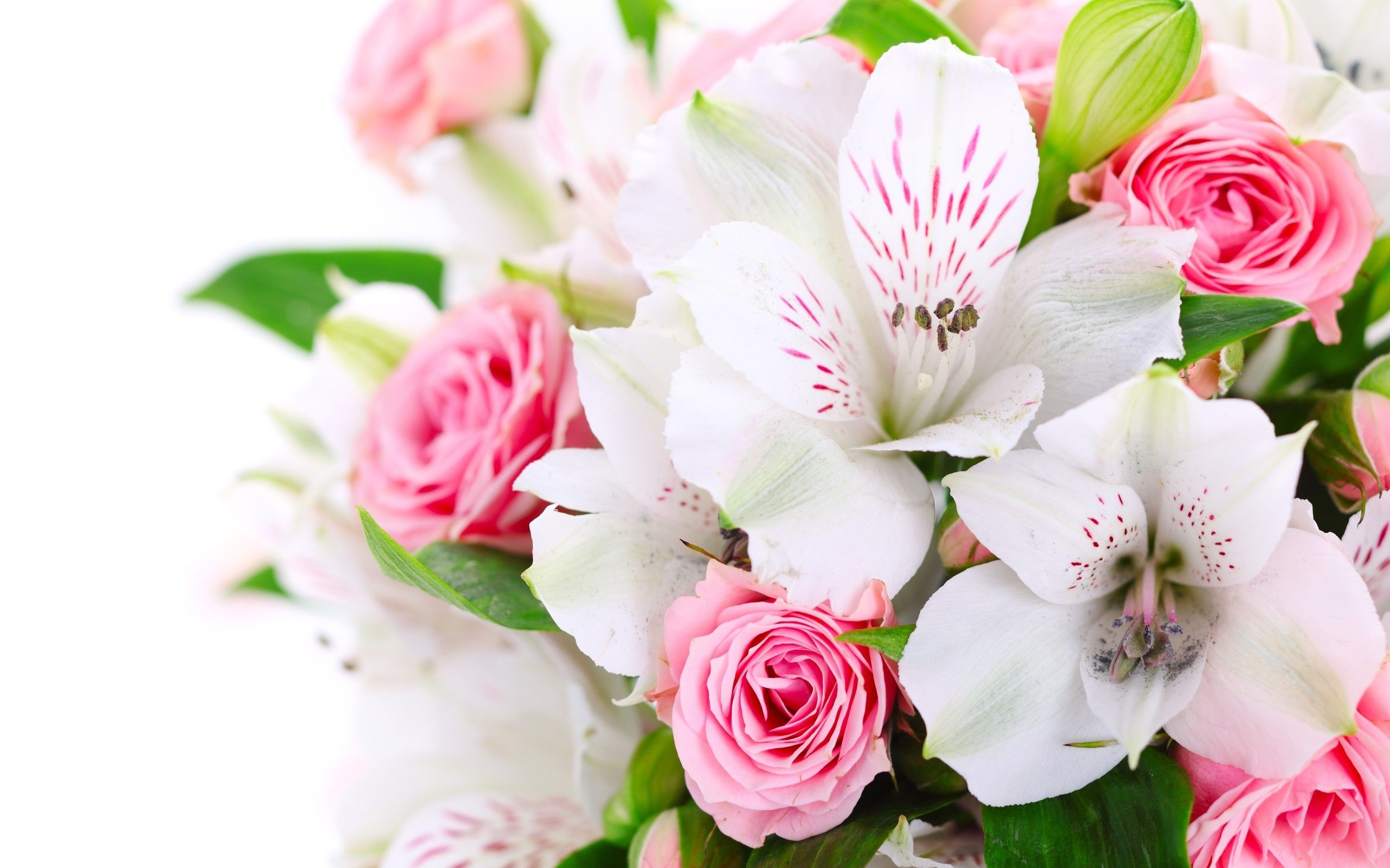 Pink And White Flower Wallpapers Top Free Pink And White Flower
