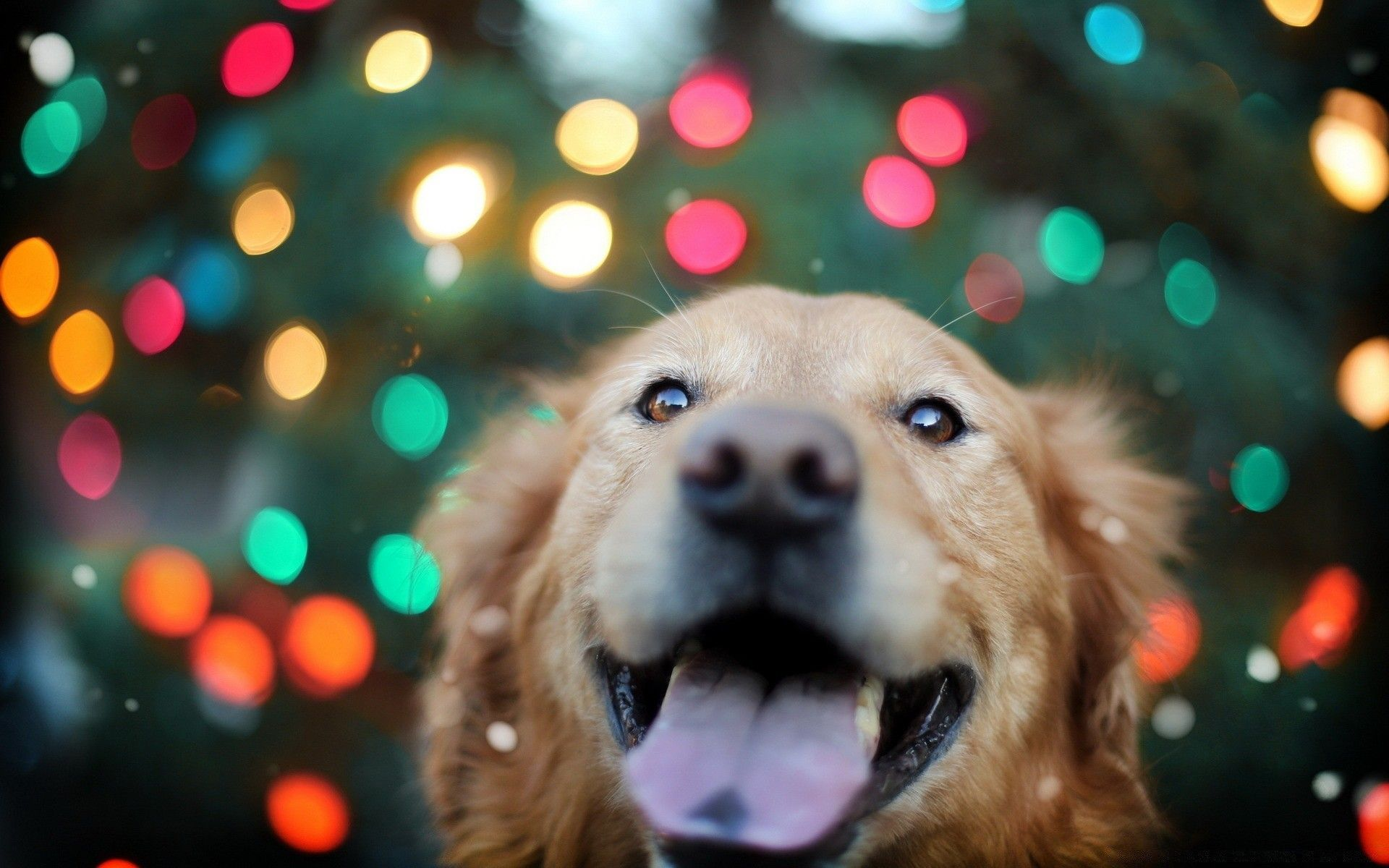Happy Dog Wallpapers Top Free Happy Dog Backgrounds Wallpaperaccess