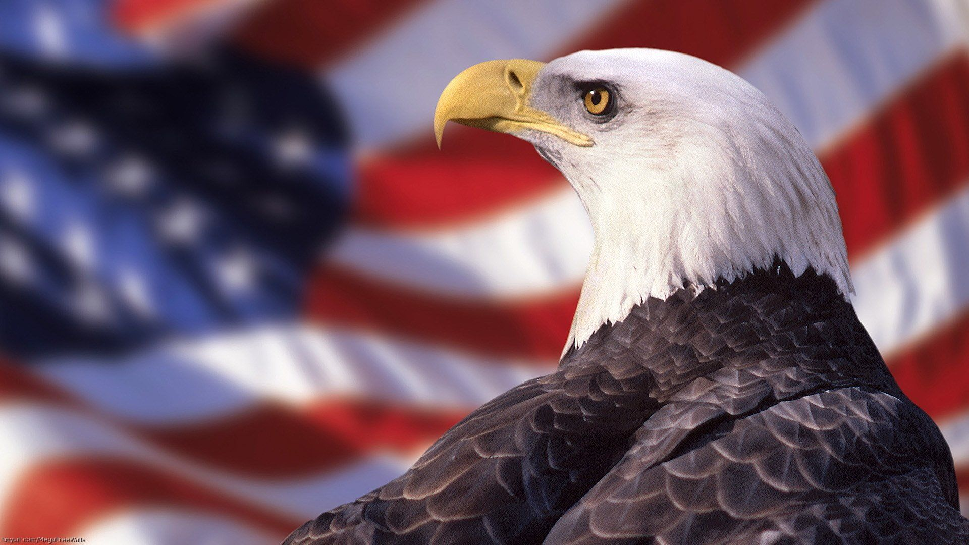 Bald Eagle Desktop Wallpapers - Top Free Bald Eagle Desktop Backgrounds -  WallpaperAccess