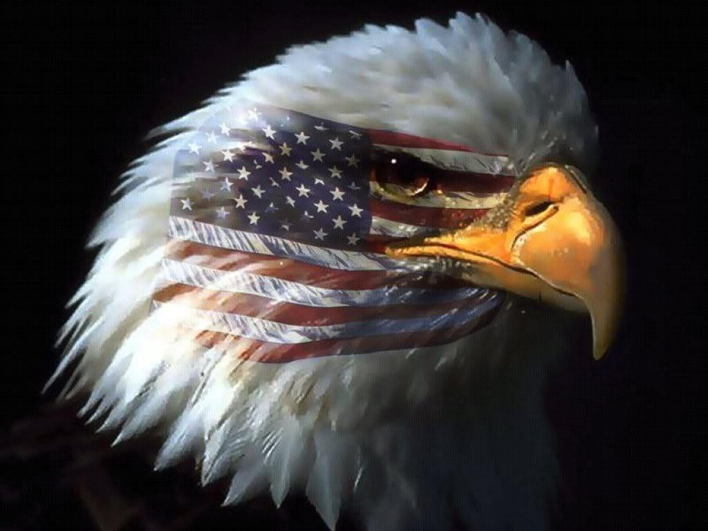 Patriotic Bald Eagle Wallpapers Top Free Patriotic Bald Eagle Backgrounds Wallpaperaccess