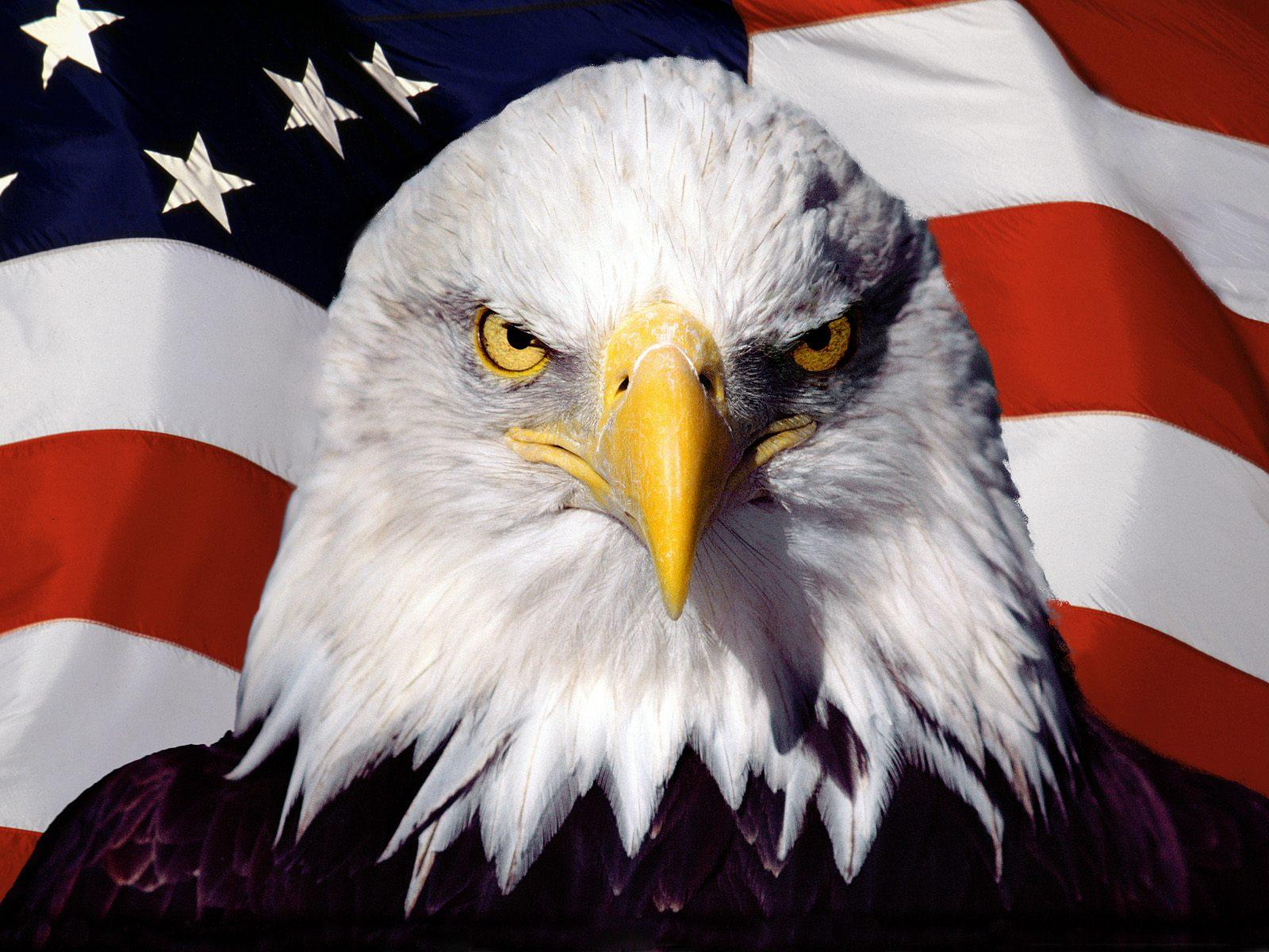 Patriotic Eagle Wallpapers Top Free Patriotic Eagle Backgrounds Wallpaperaccess