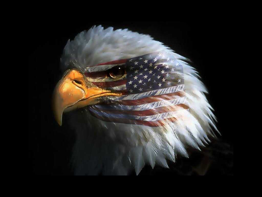 American Eagle Wallpapers Top Free American Eagle Backgrounds