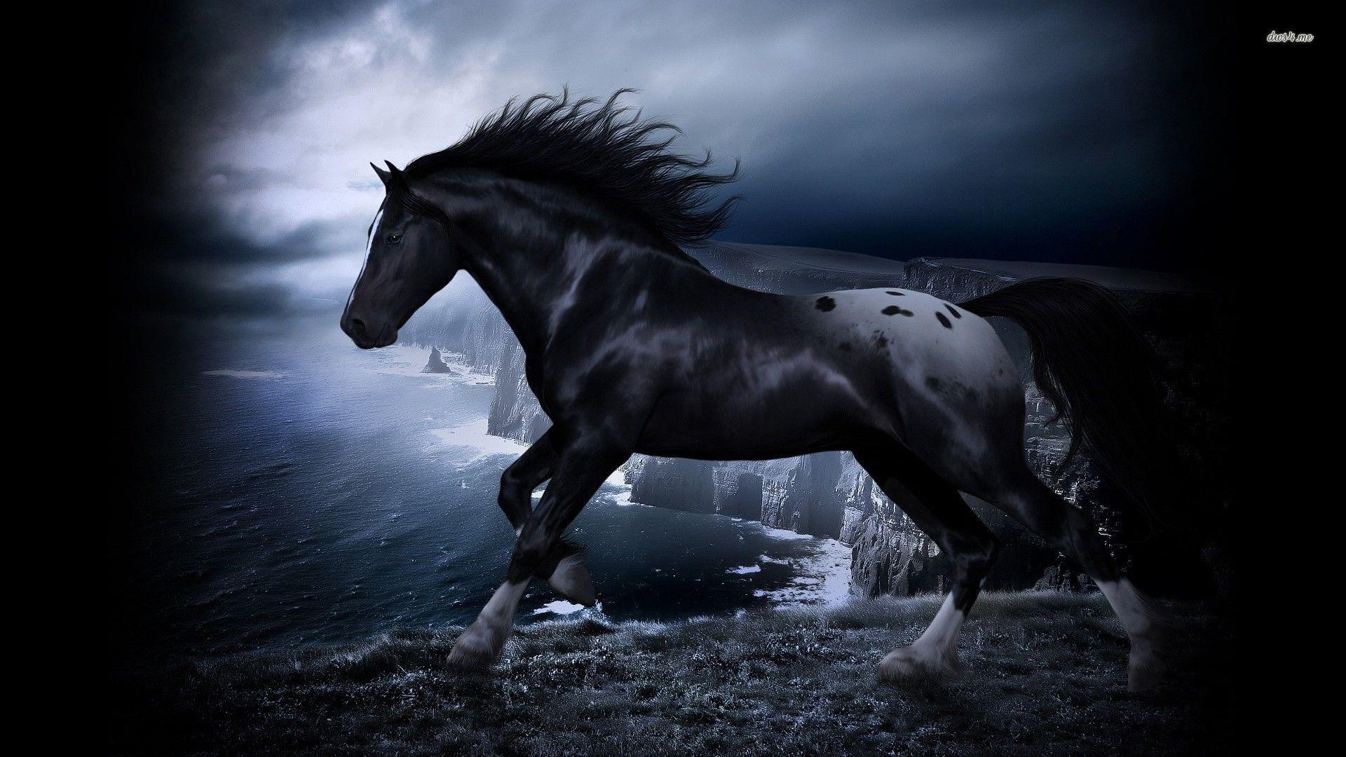 Black And White Horse Wallpapers Top Free Black And White Horse