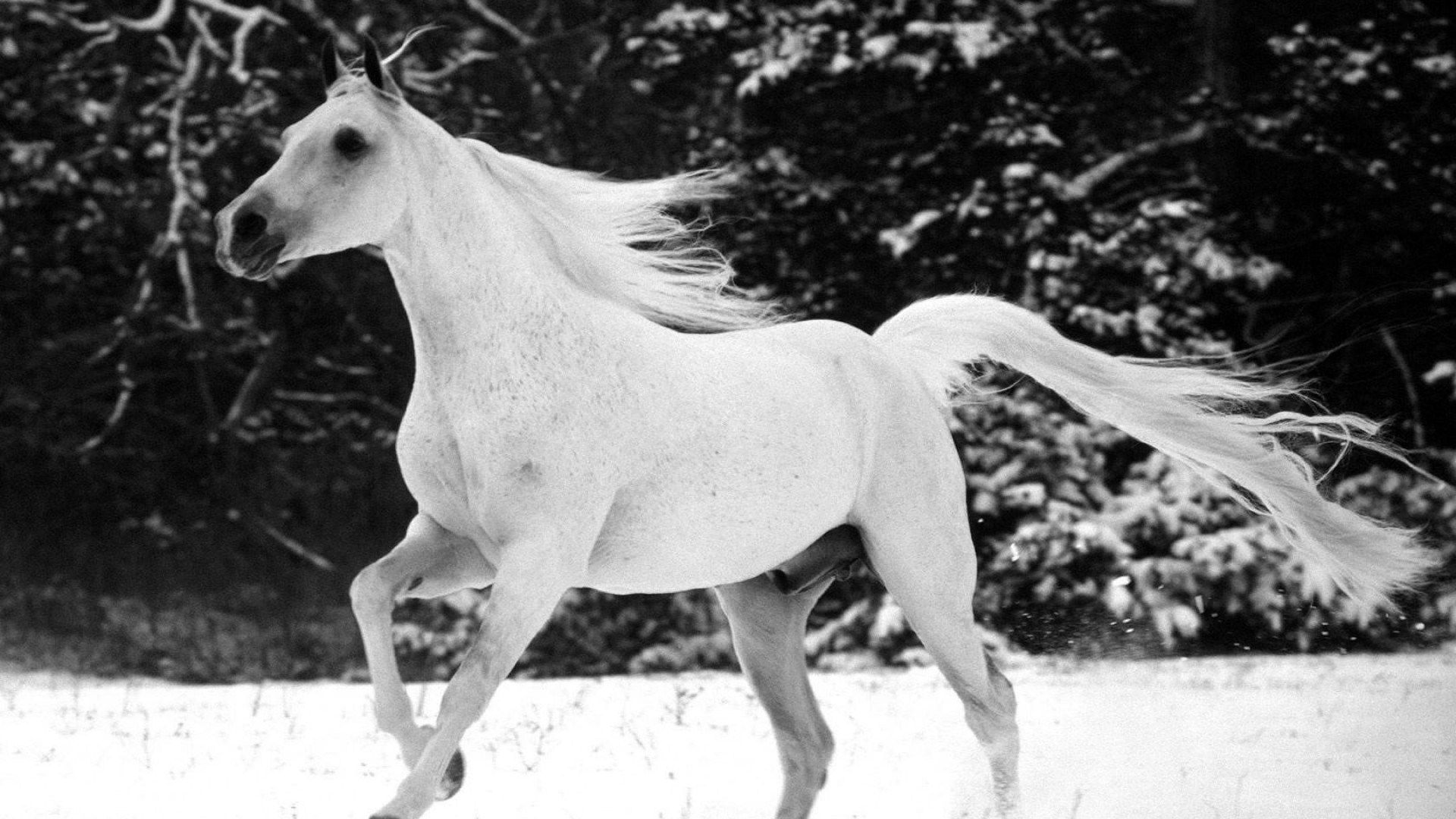 Black And White Horse Wallpapers Top Free Black And White Horse Backgrounds Wallpaperaccess