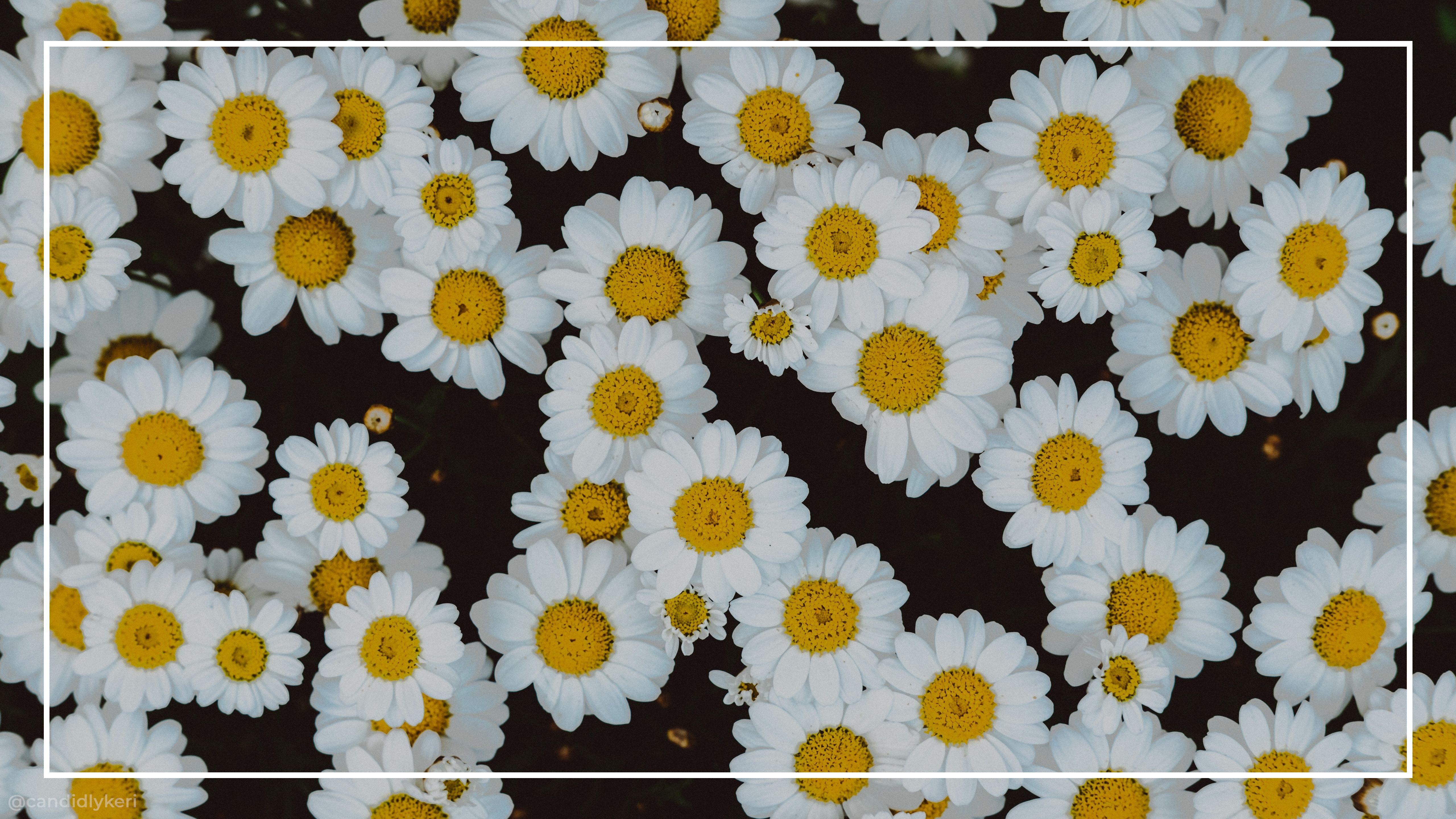 Aesthetic Flowers Laptop Wallpapers Top Free Aesthetic Flowers Laptop Backgrounds Wallpaperaccess
