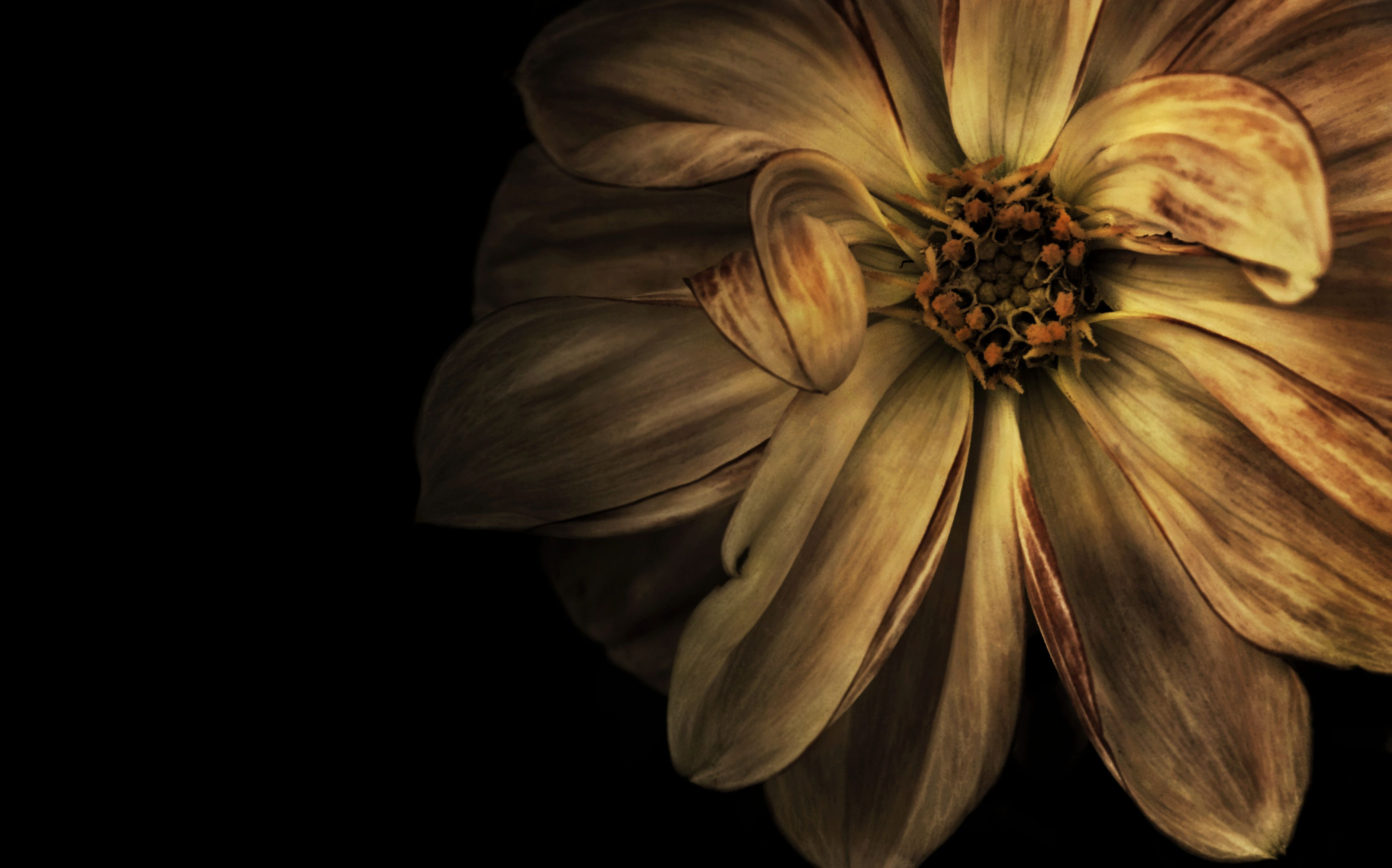 Brown Flower Wallpapers Top Free Brown Flower Backgrounds Wallpaperaccess
