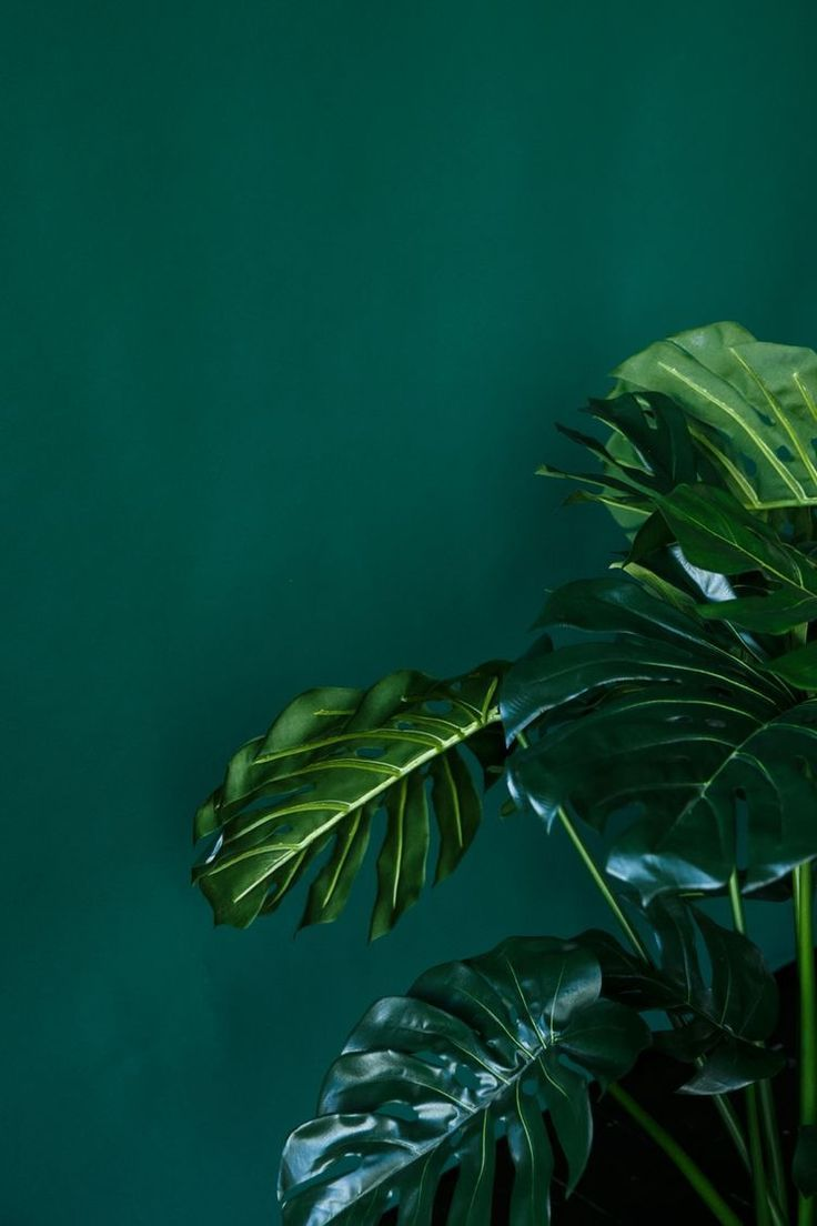 Green Aesthetic Wallpapers Top Free Green Aesthetic Backgrounds Wallpaperaccess