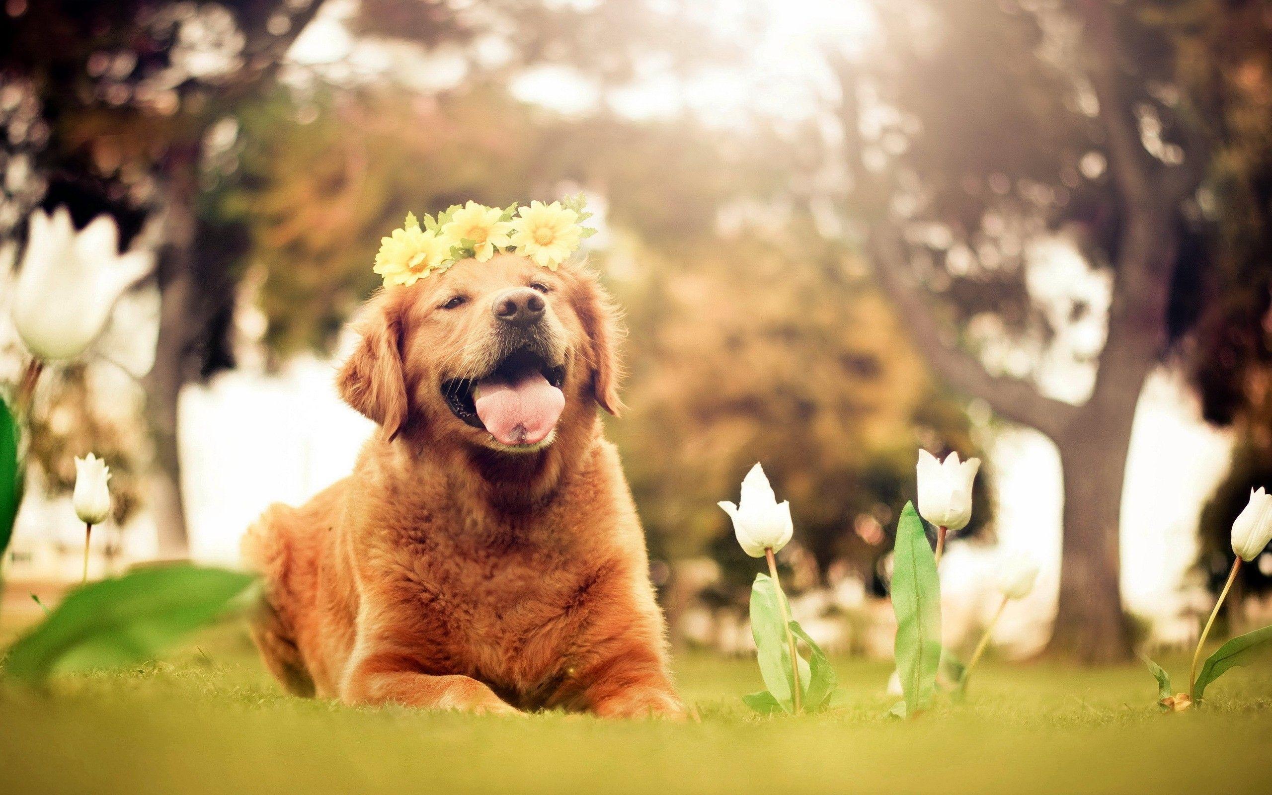 Springtime Dog Wallpapers Top Free Springtime Dog Backgrounds Wallpaperaccess