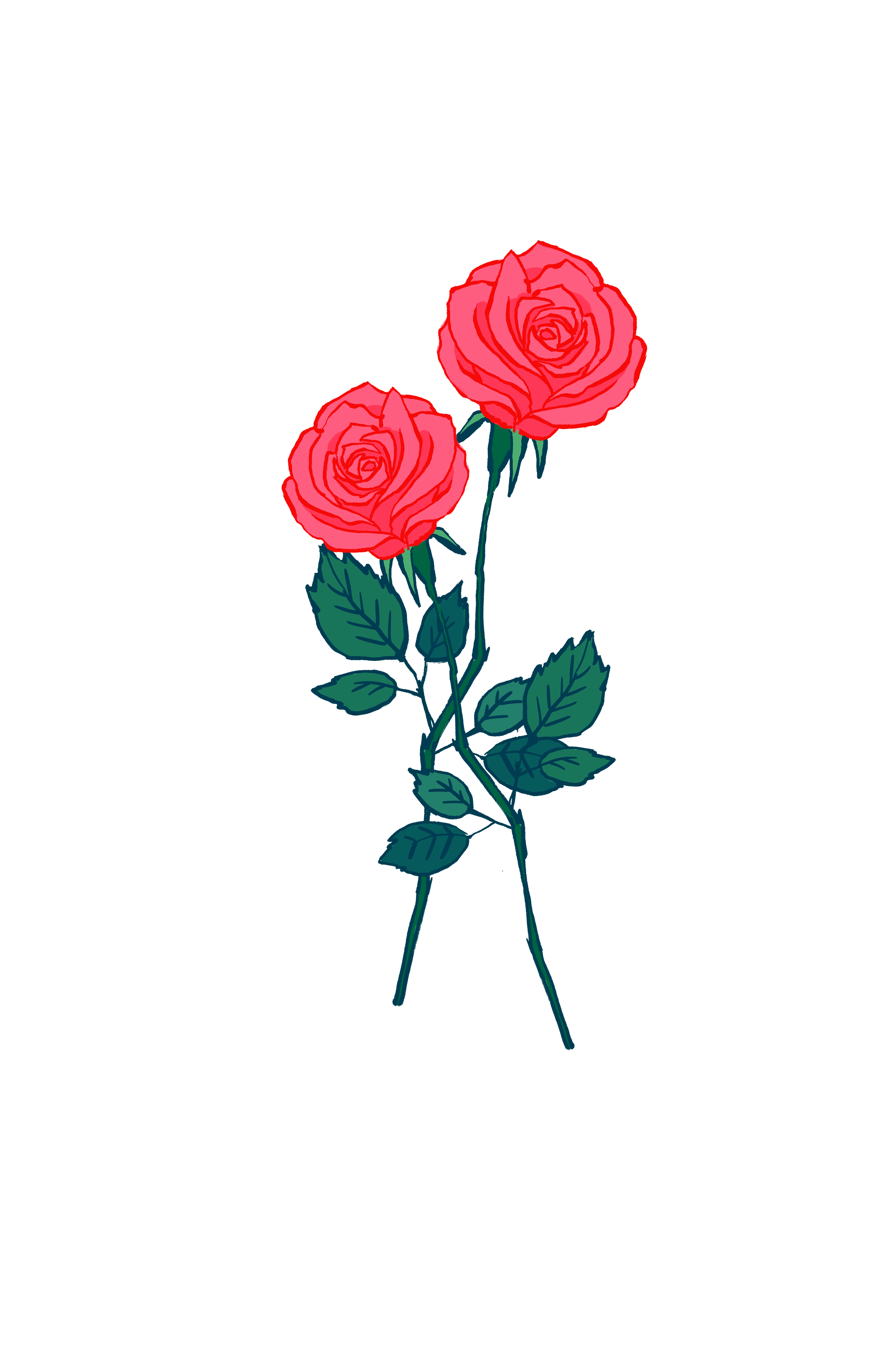 Rose Drawing Wallpapers Top Free Rose Drawing Backgrounds Wallpaperaccess